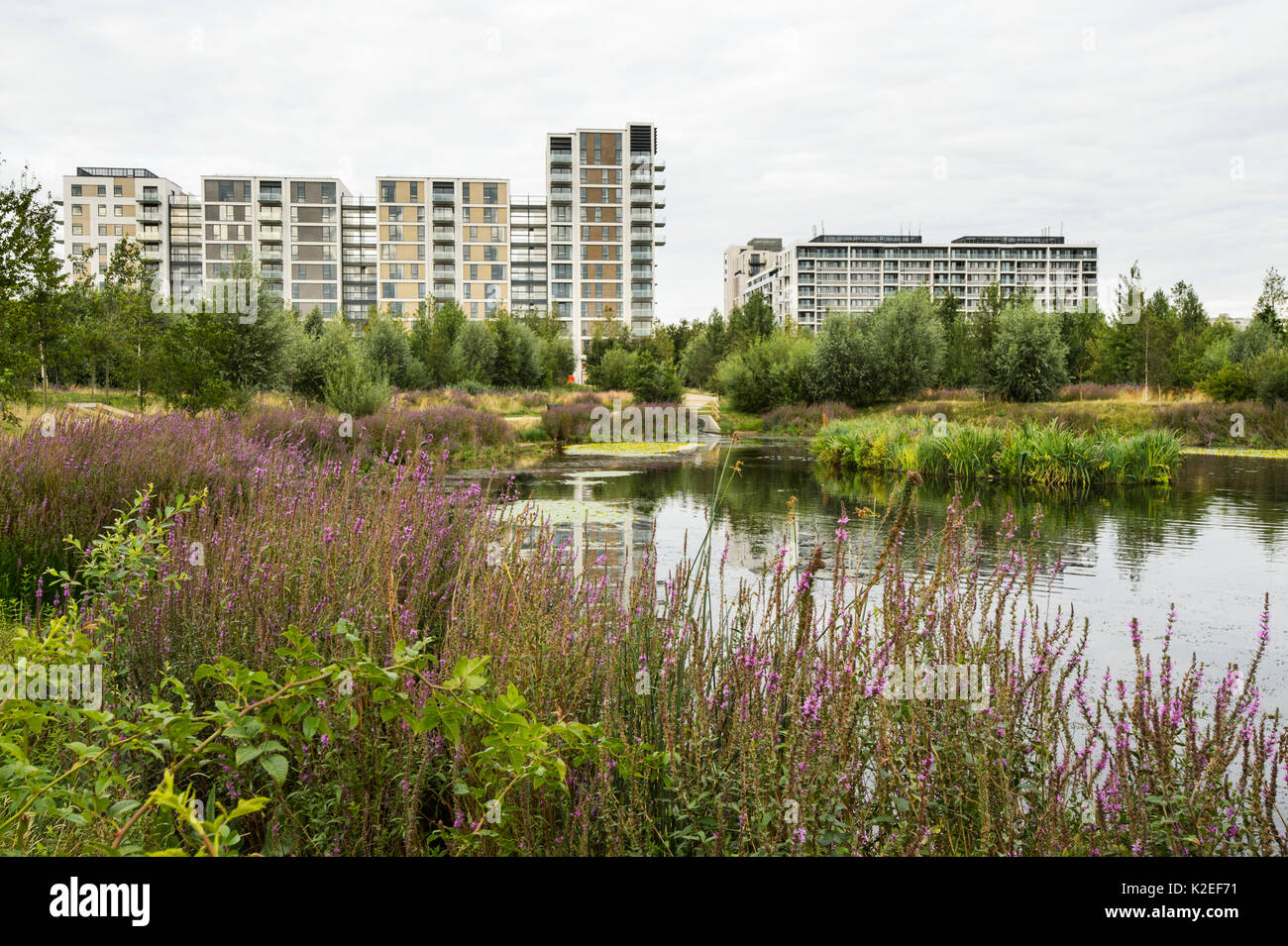 Environmental enrichment designed into housing estate, with wildlife pond and green space, East Village housing at site of Olympic Village, Stratford, London, UK 2014 - Stock Image