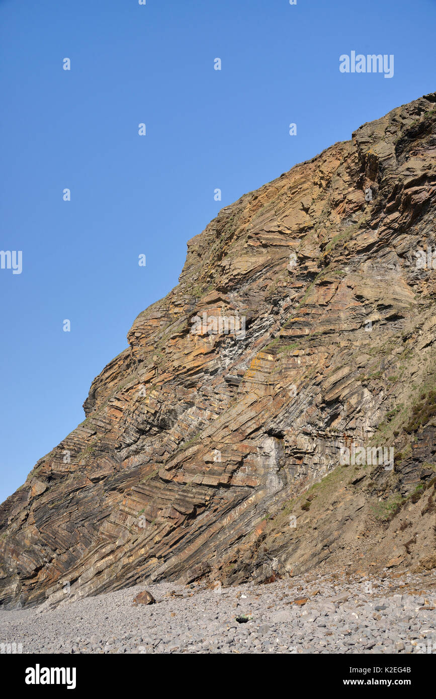 Chevron folds of Sandstone and shale rock layers in Millook Haven cliffs, Cornwall, UK, April 2014. - Stock Image