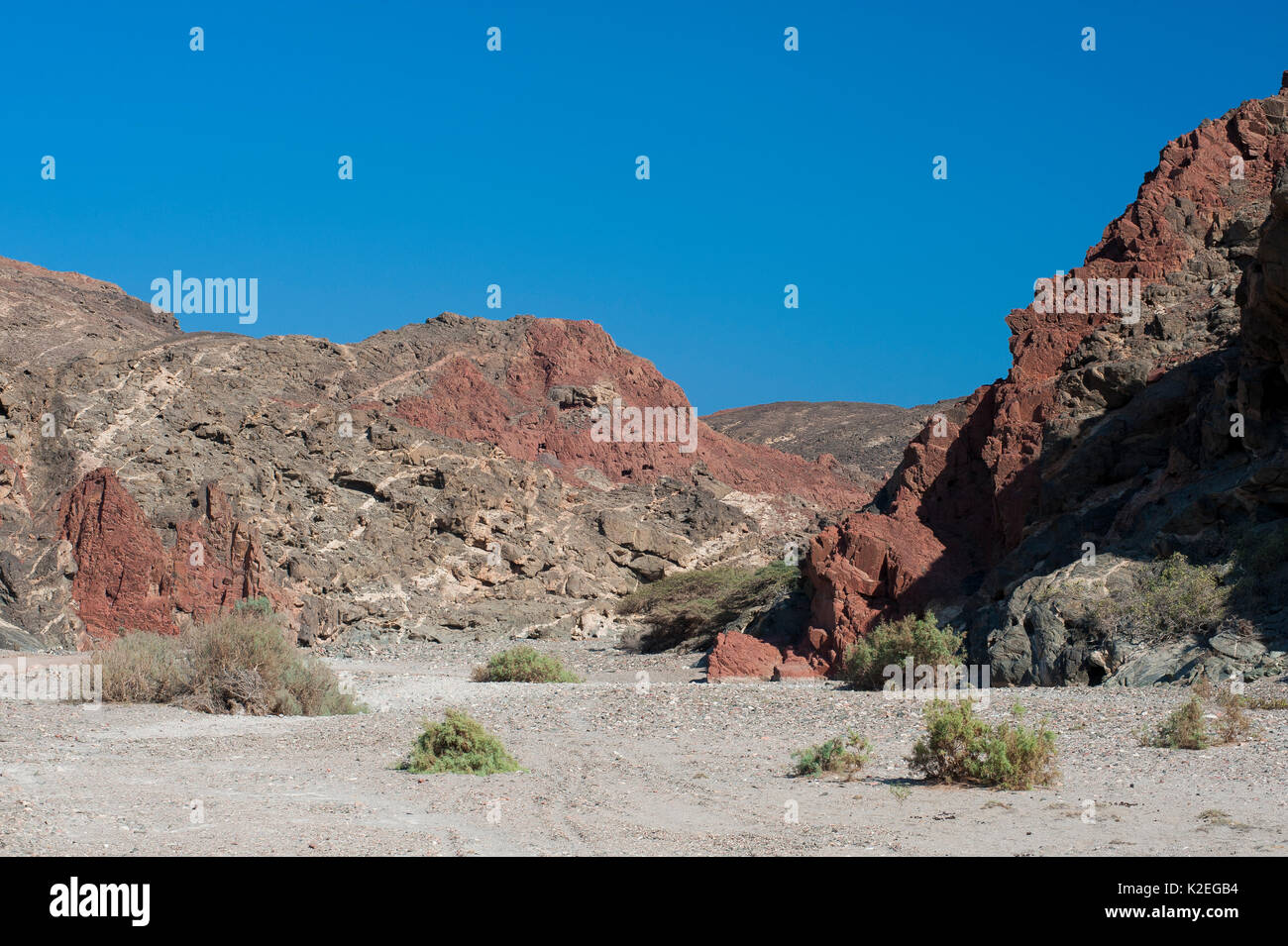 Rocky desert with differently coloured stone, Wadi Shat, Sultanate of Oman, February. - Stock Image