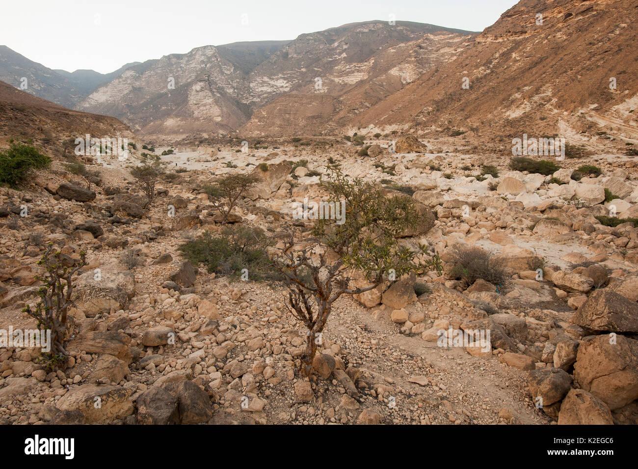 Rocky desert of Wadi Hashir near Al Mughsayl, Sultanate of Oman, February. - Stock Image