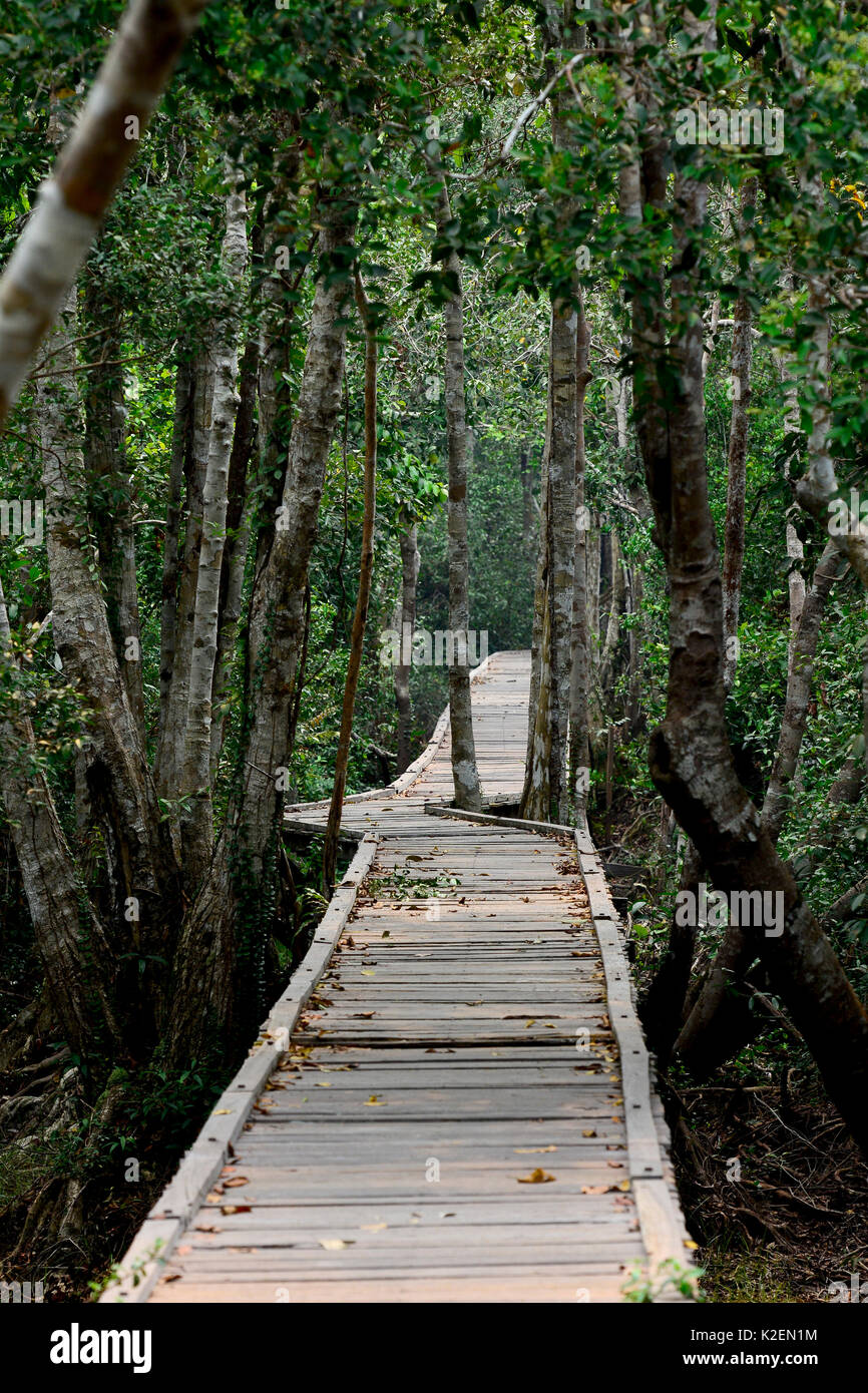 Wooden walkway through the forest, Tanjung Puting National Park, Kalimantan, Borneo. Indonesia, October 2015. - Stock Image