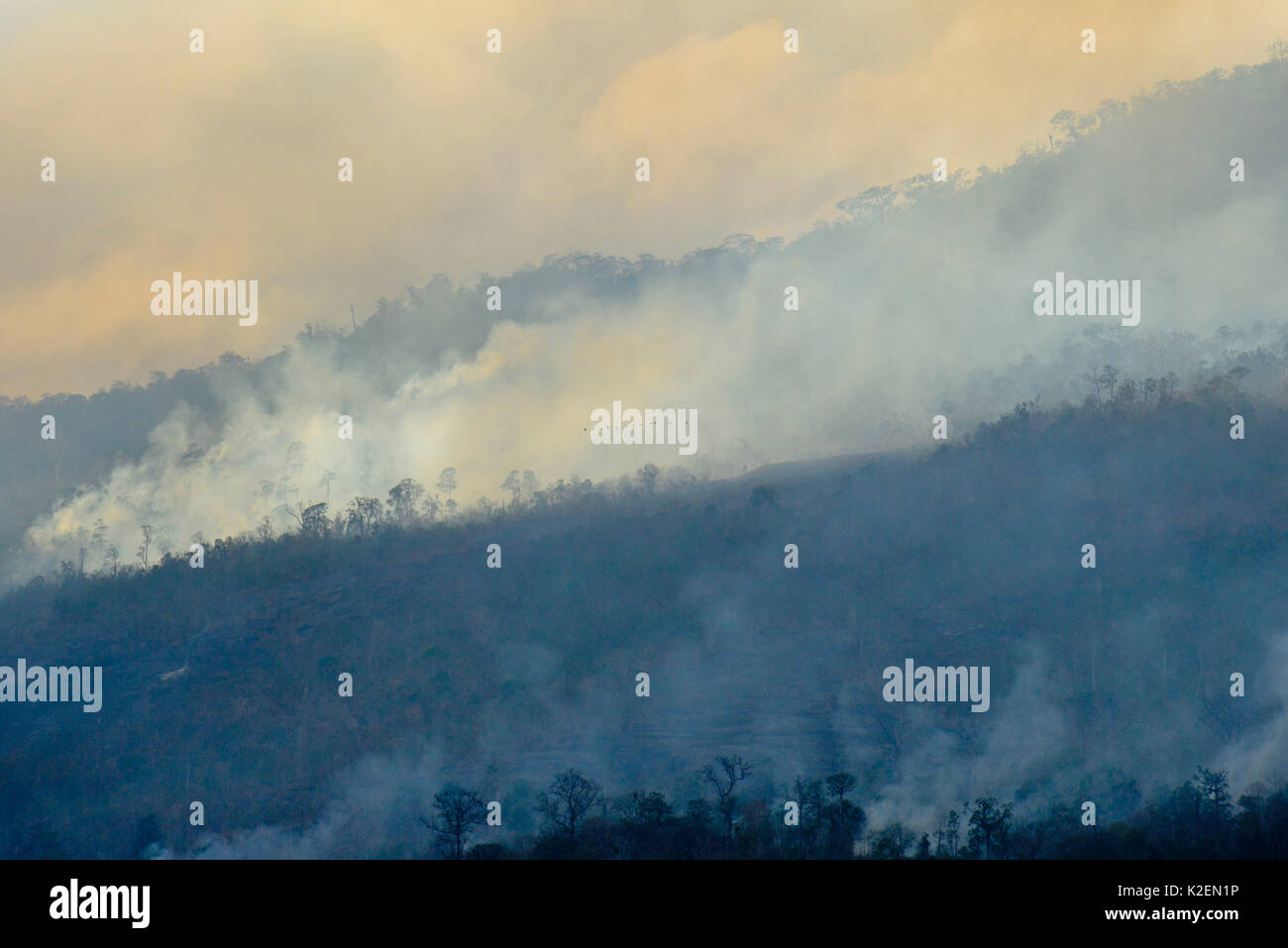 Fire inside the Tangkoko National Park with birds flying in the distance. The fire lasted two weeks, until it was extinguished by a storm from the sea. Sulawesi, Indonesia, October 2015. - Stock Image