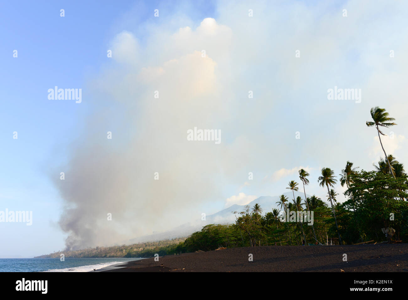 Fire inside the Tangkoko National Park. The fire lasted two weeks, until it was extinguished by a storm from the sea. Sulawesi, Indonesia, October 2015. - Stock Image