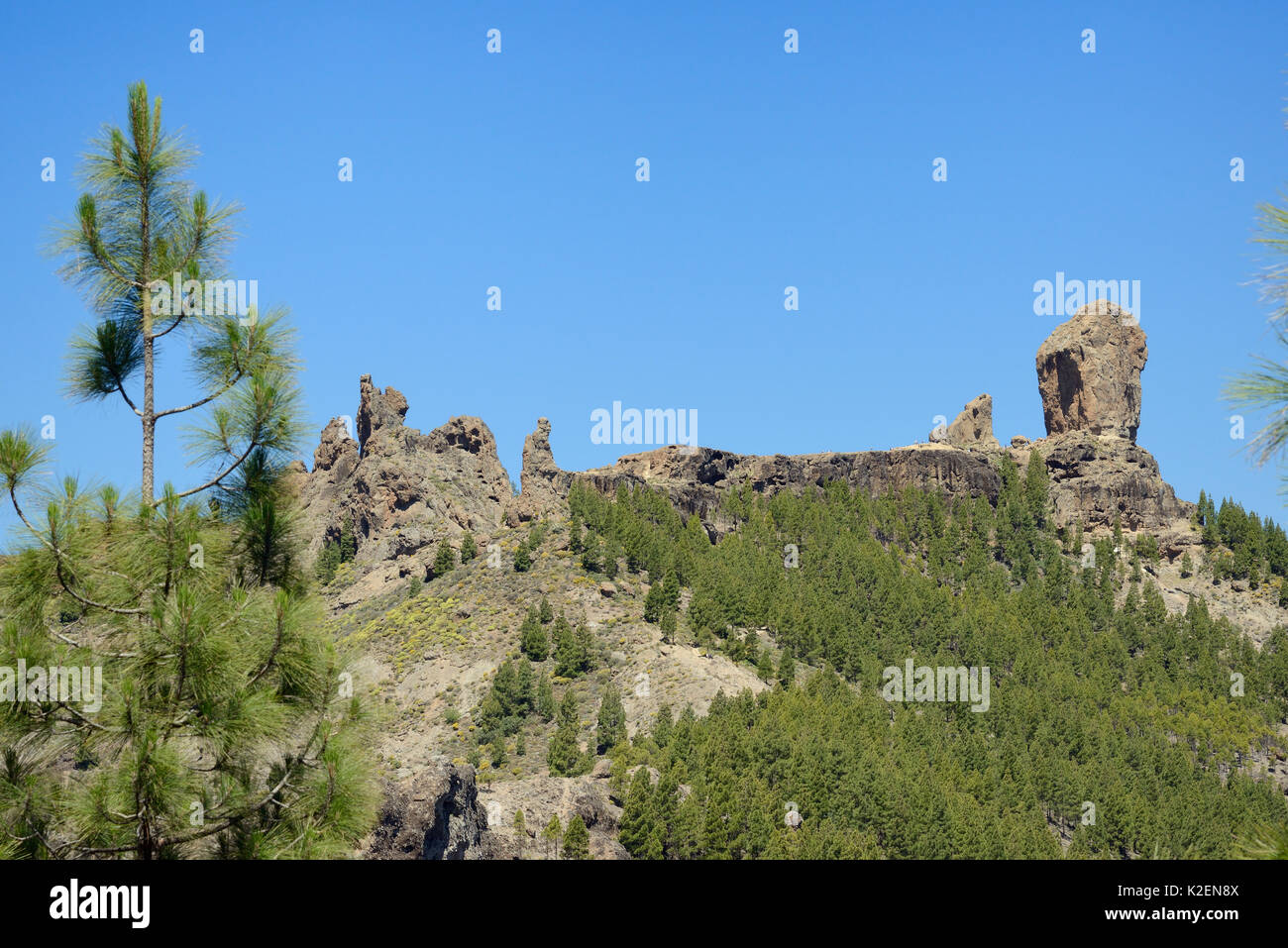 Roque Nublo and other volcanic basaltic monoliths on the Tablon Nublo plateau, within a UNESCO Biosphere Reserve, Gran Canaria, flanked by Canary Island pines (Pinus canariensis), near Tejeda, May 2016. - Stock Image