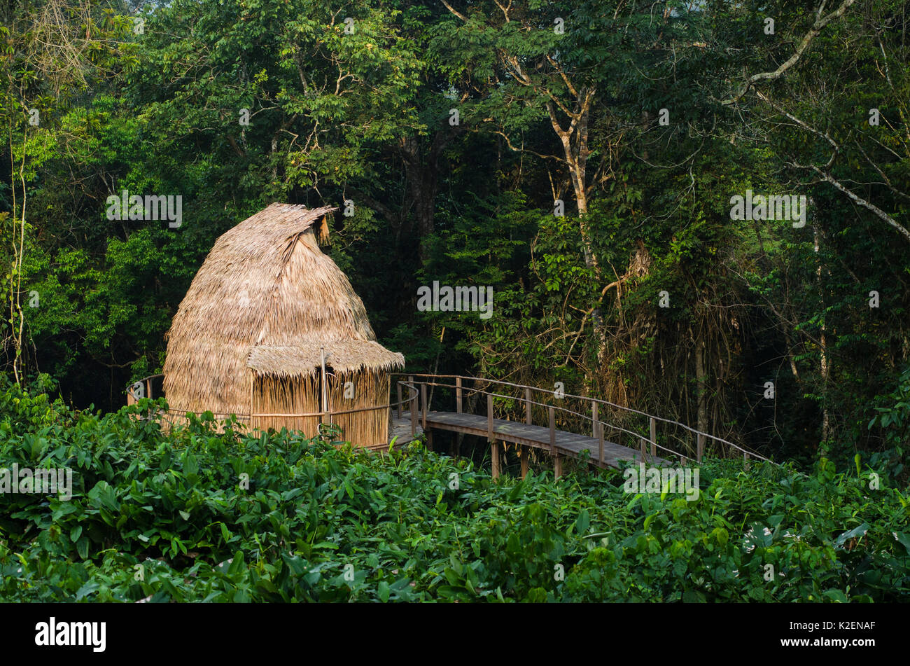 Guest cabin, Ngaga Camp, Republic of Congo (Congo-Brazzaville), Africa, May 2013. - Stock Image