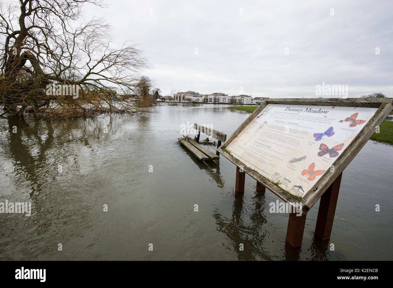 Bench and wildlife information board in park flooded by River Thames, Chertsey, Surrey, UK, February 2014. - Stock Image