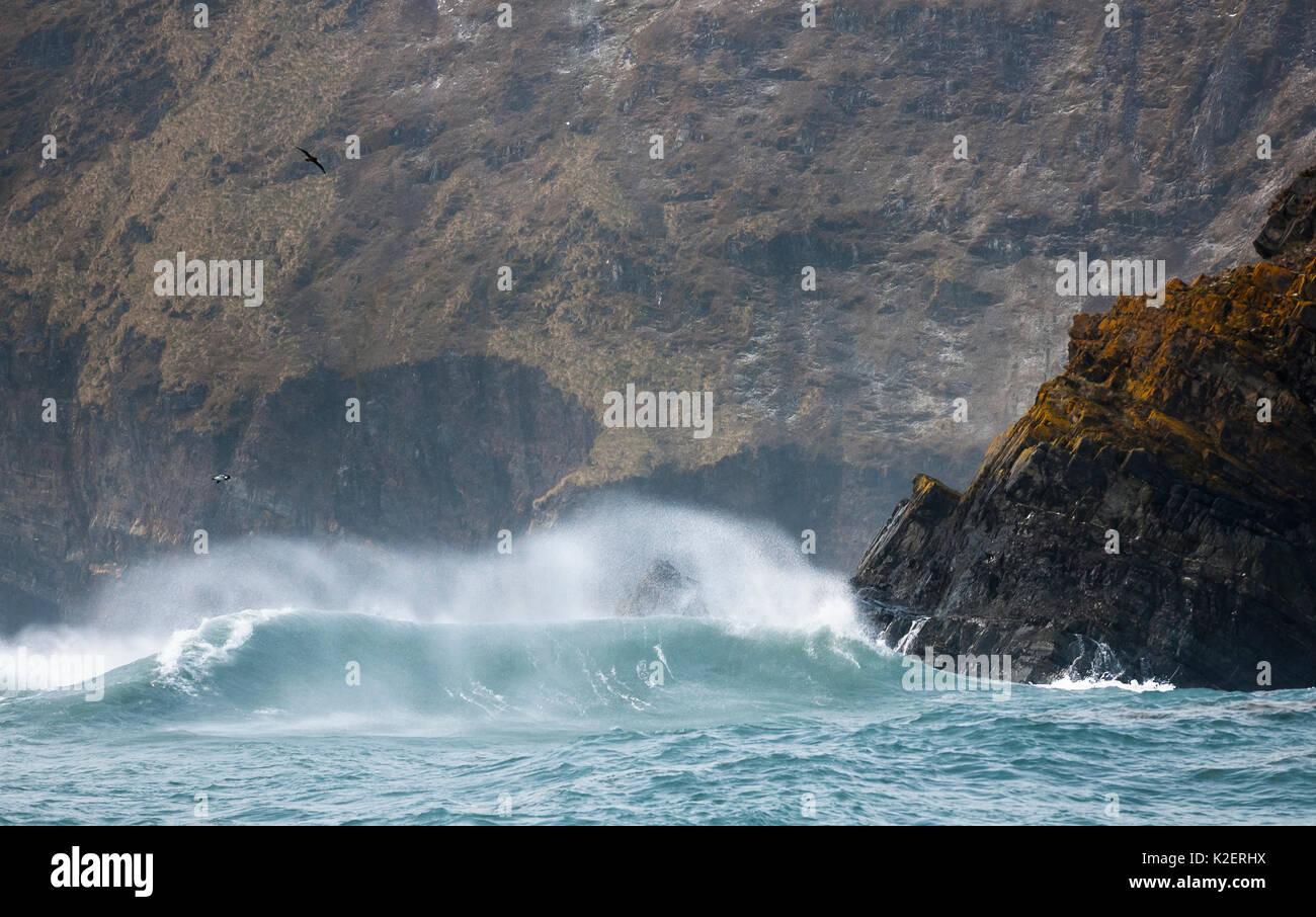Waves crashing against a beach on South Georgia Island. November 2013. - Stock Image