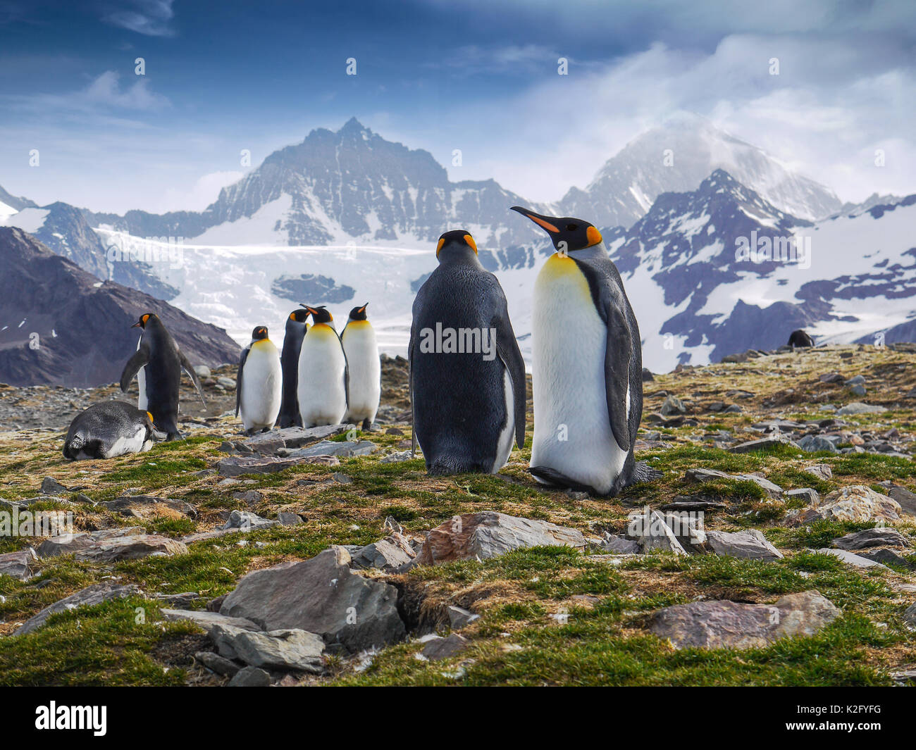 Low angle view of a group of king penguins standing in front of dramatic snow-capped mountains on South Georgia Island in the South Atlantic Ocean. - Stock Image