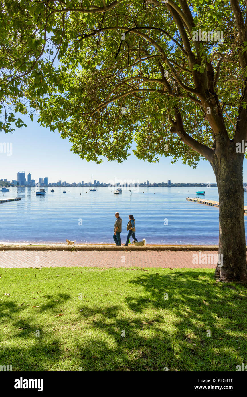 Couple walking their dog along the foreshore of the Matilda Bay Reserve on the Swan River at Crawley, Perth, Western - Stock Image