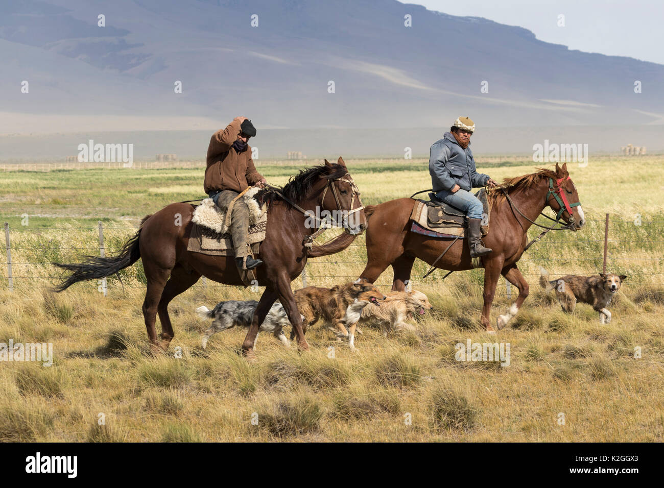 Gauchos and their dogs, Patagonia, Chile, March 2015. - Stock Image