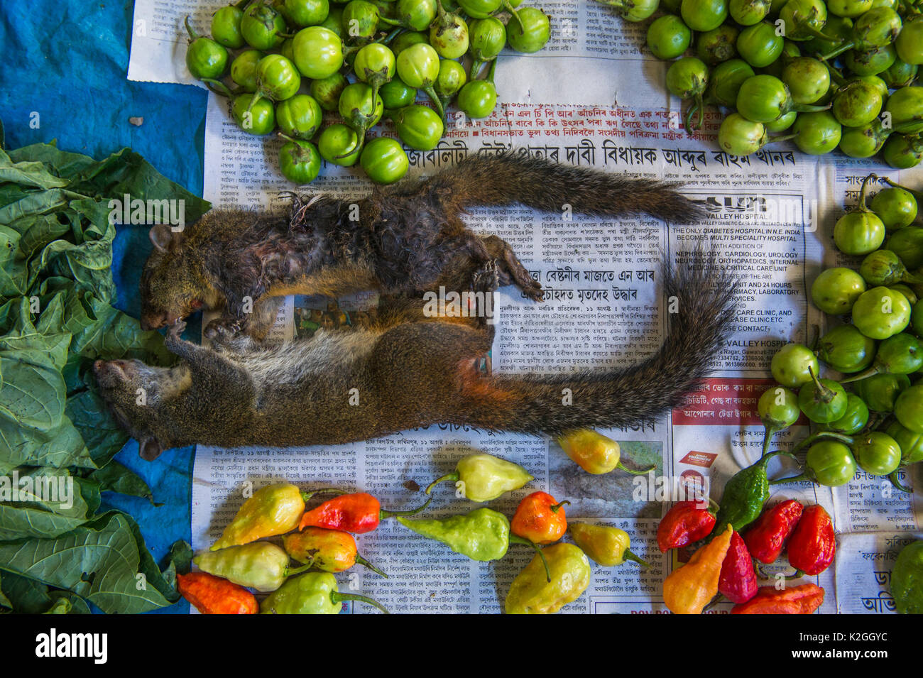 Squirrels for sale in market for food, Apatani Tribe, Ziro Valley, Himalayan Foothills, Arunachal Pradesh, North East India, November 2014. - Stock Image