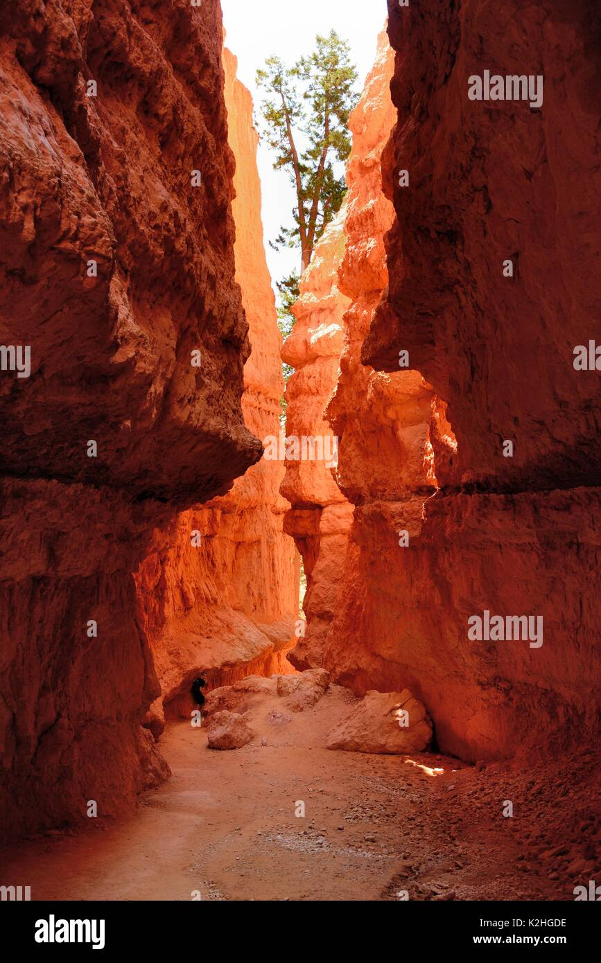 Bryce Canyon Wall Street Lone Walker - Stock Image