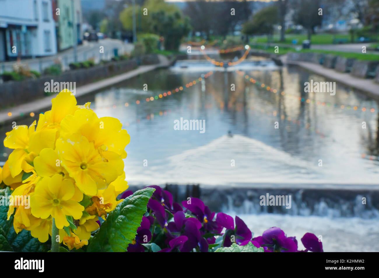 Flowers in Dawlish, UK - Stock Image