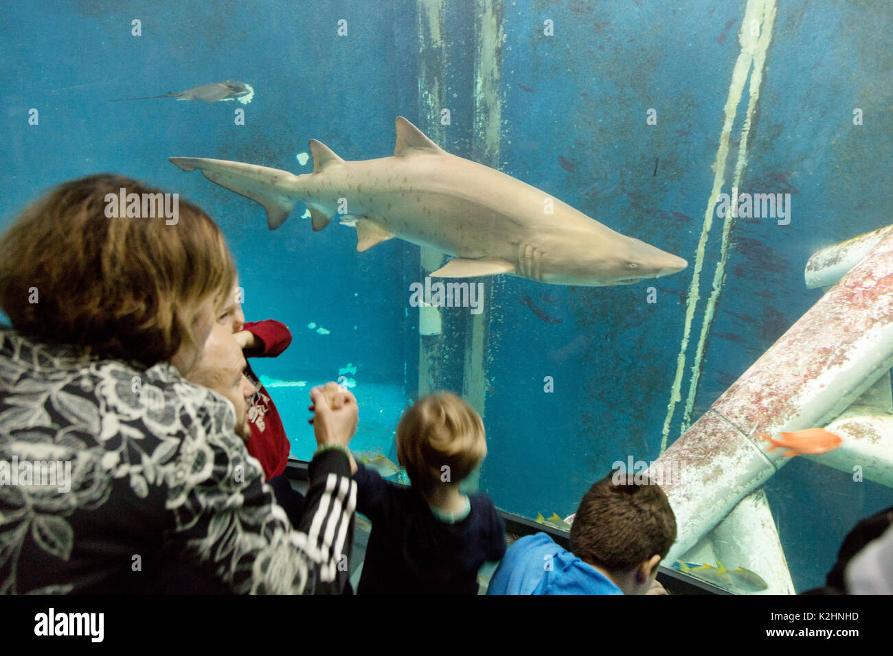 St Malo aquarium - tourists looking at a shark, Great Aquarium Saint Malo ,  Brittany France - Stock Image