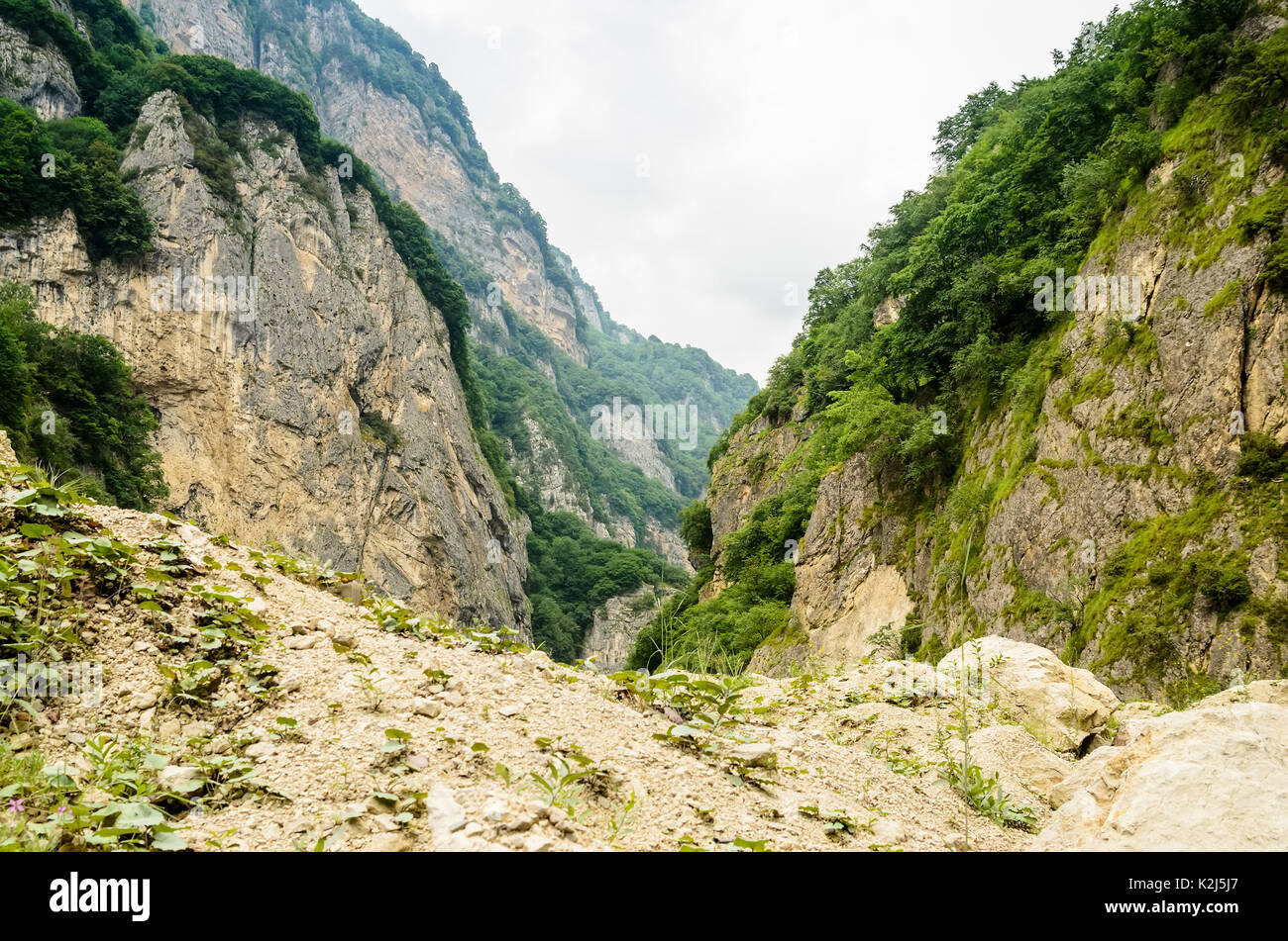 Beautiful green gorge in Ossetian mountains - Stock Image