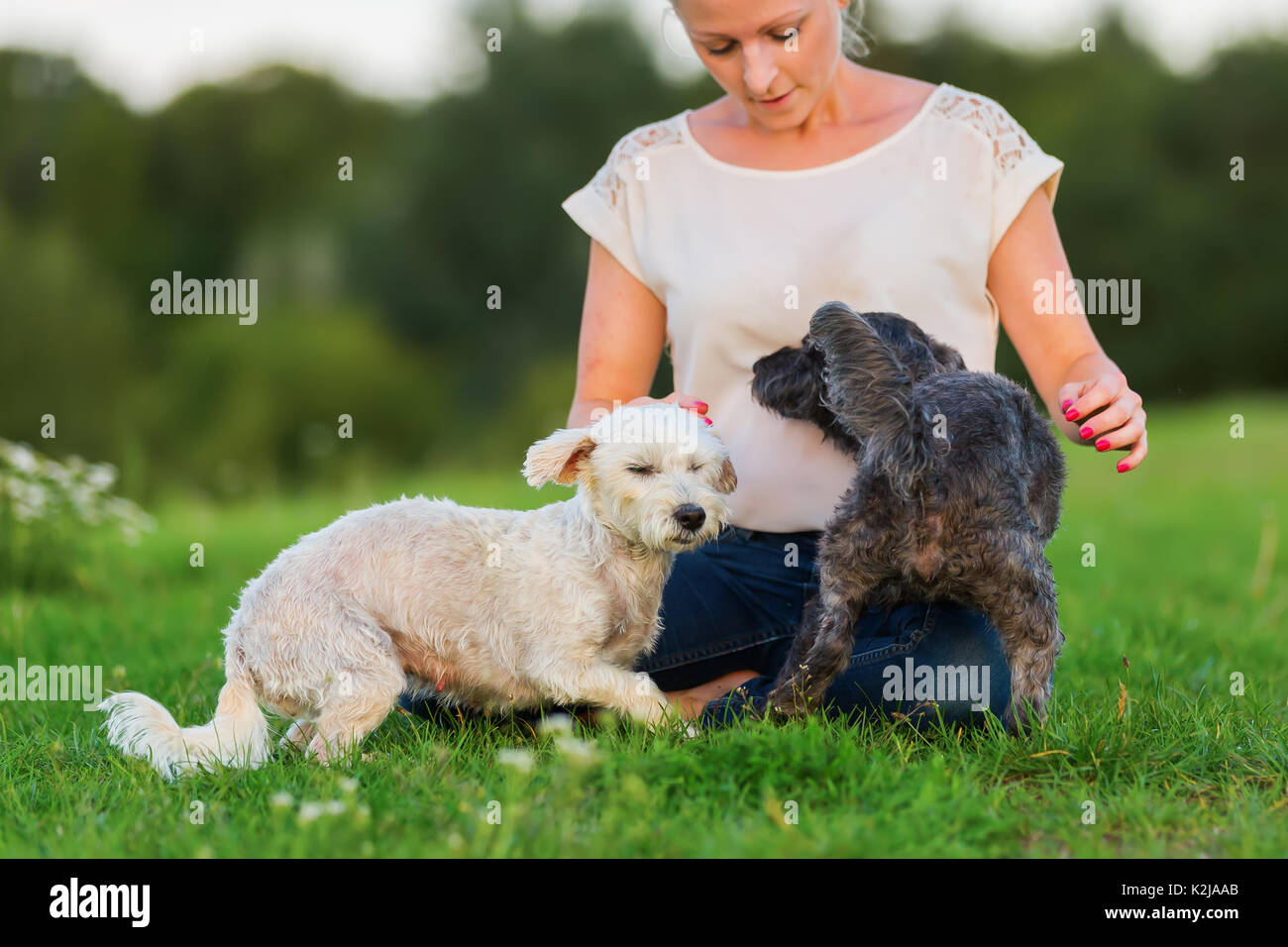 picture of a woman who plays with two terrier hybrid dogs outdoors - Stock Image