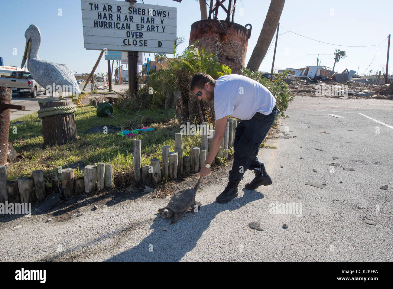 Port Aransas, TX, USA. 30th Aug, 2017. Paramedic Danny Johnson gets a snapping turtle out of harm's way as cleanup starts in Port Aransas Texas near Corpus Christi following Hurricane Harvey. Credit: Bob Daemmrich/Alamy Live News - Stock Image