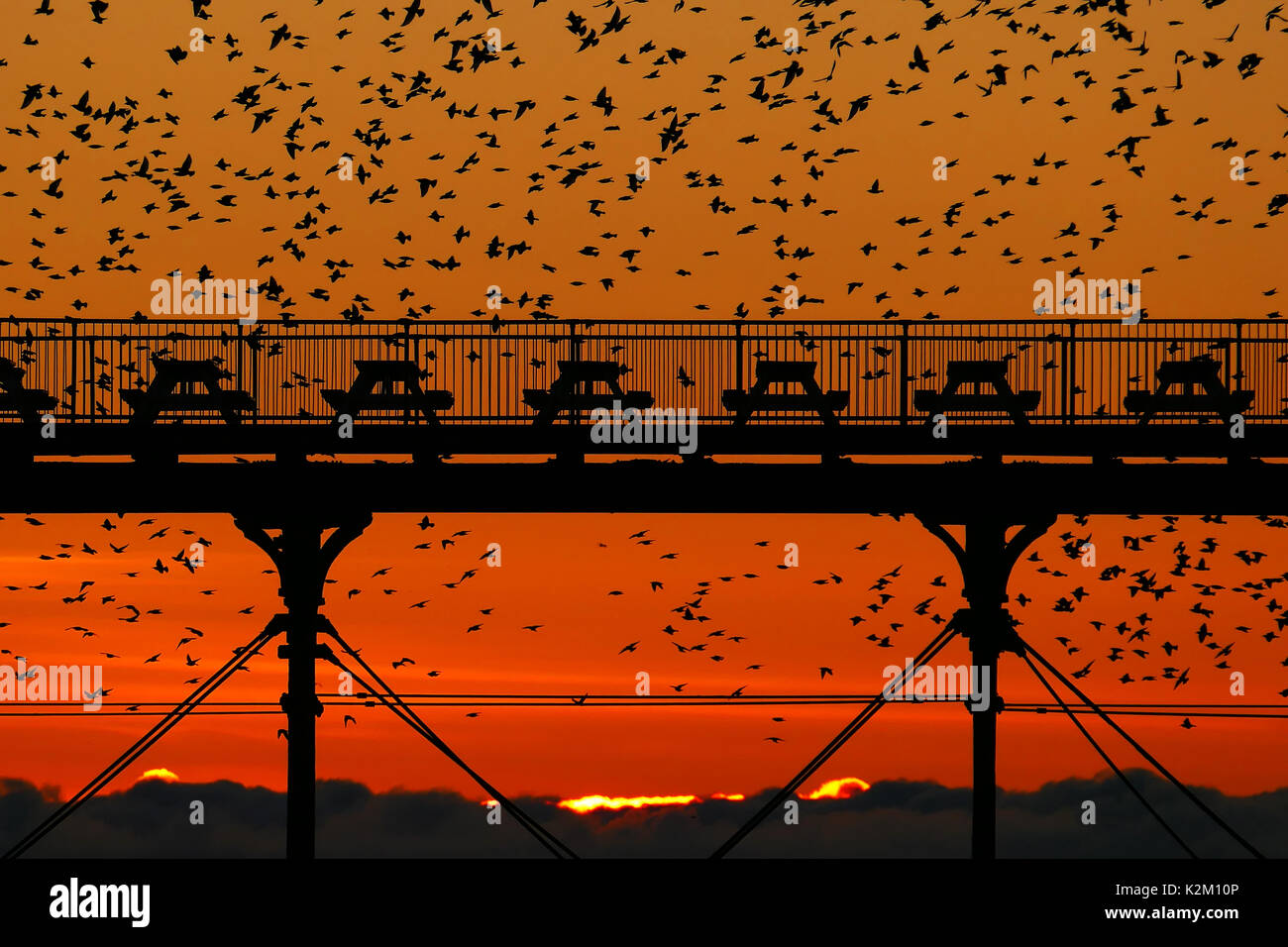 Starlings swarm around Aberystwyth's Royal Pier on a winters evening just after the sun goes down. - Stock Image