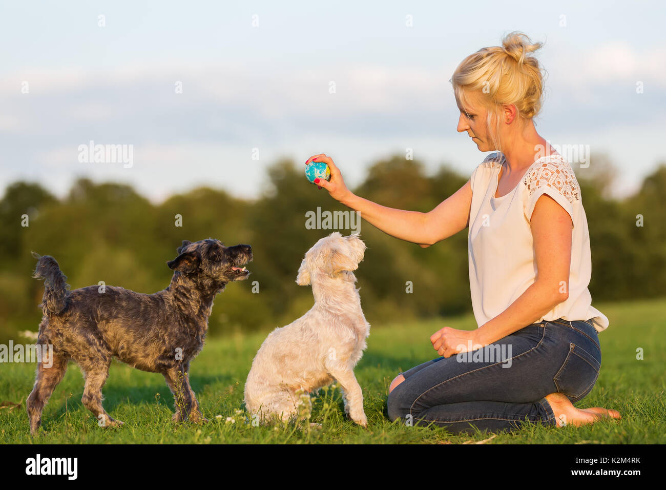 picture of a pretty woman who plays with two terrier hybrid dogs outdoors - Stock Image