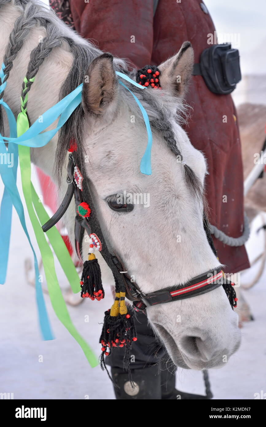 Portrait of a horse adorned with ribbons - Stock Image