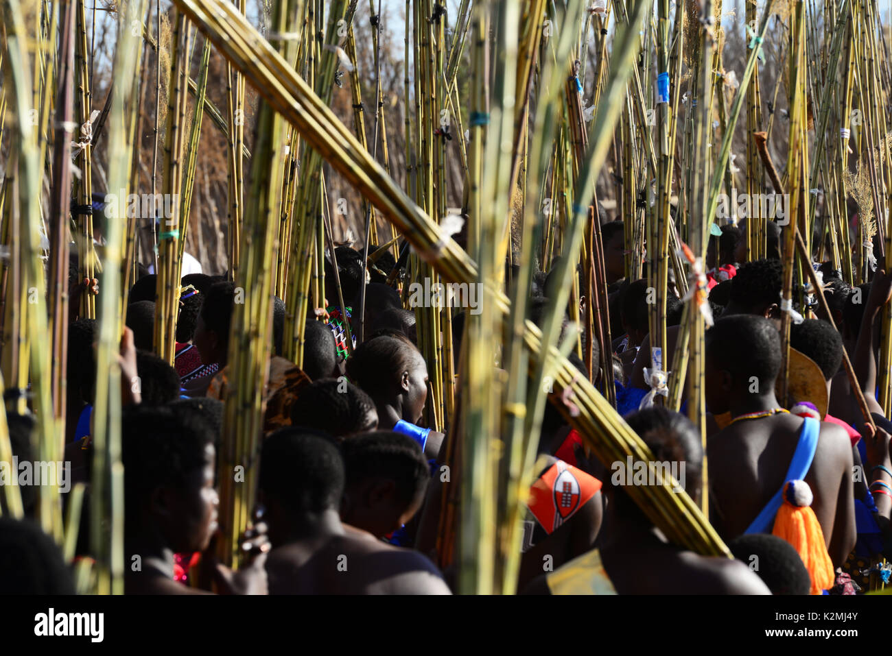 Swaziland Umhlanga Reed Dance Stock Photo