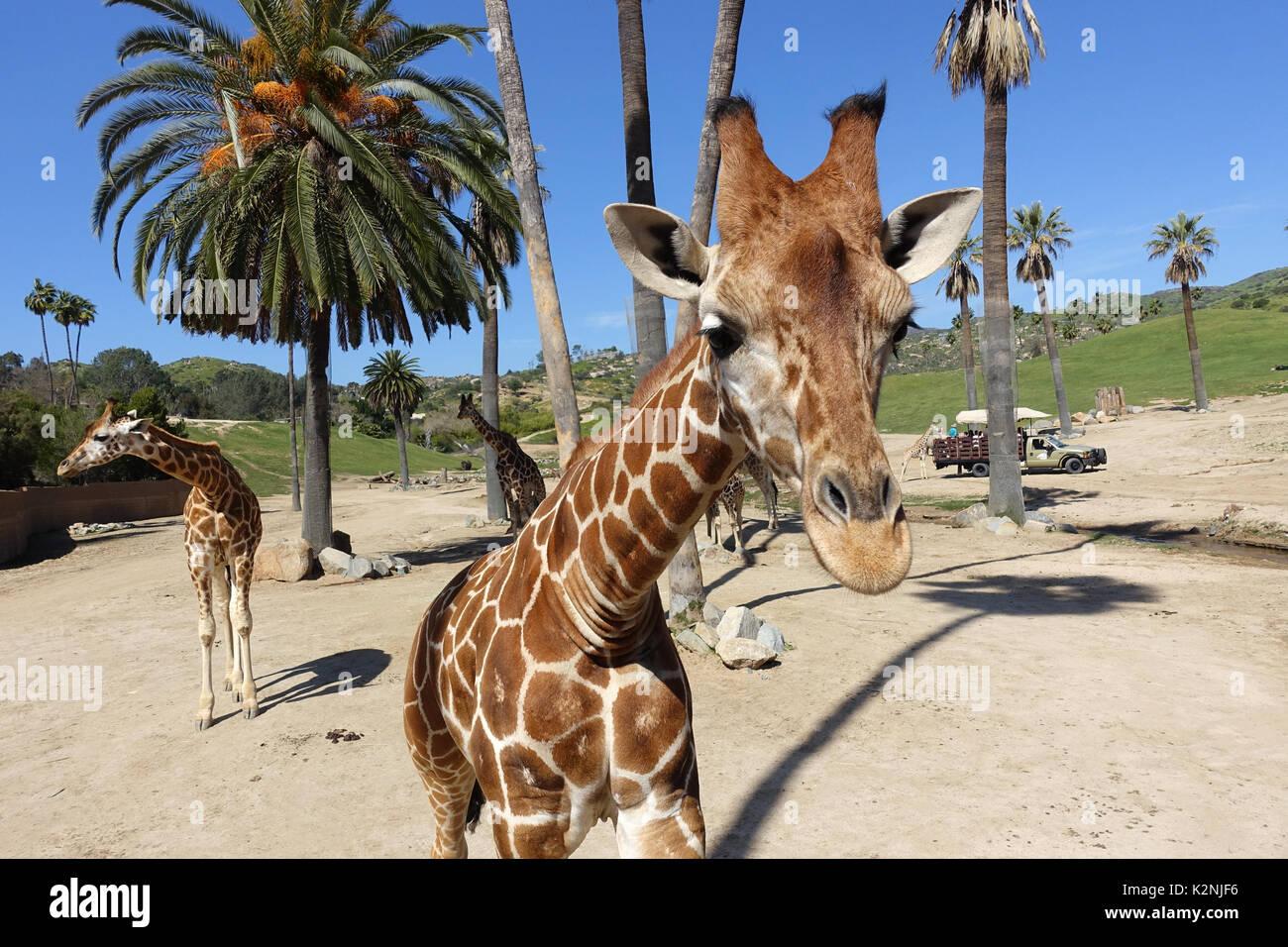 San Diego Zoo Safari Park Stock Photos & San Diego Zoo