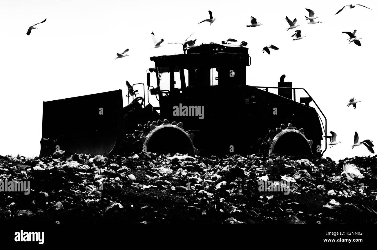 Heavy bulldozer compacting landfill waste followed by seagulls - mono, black and white, silhouette - Stock Image