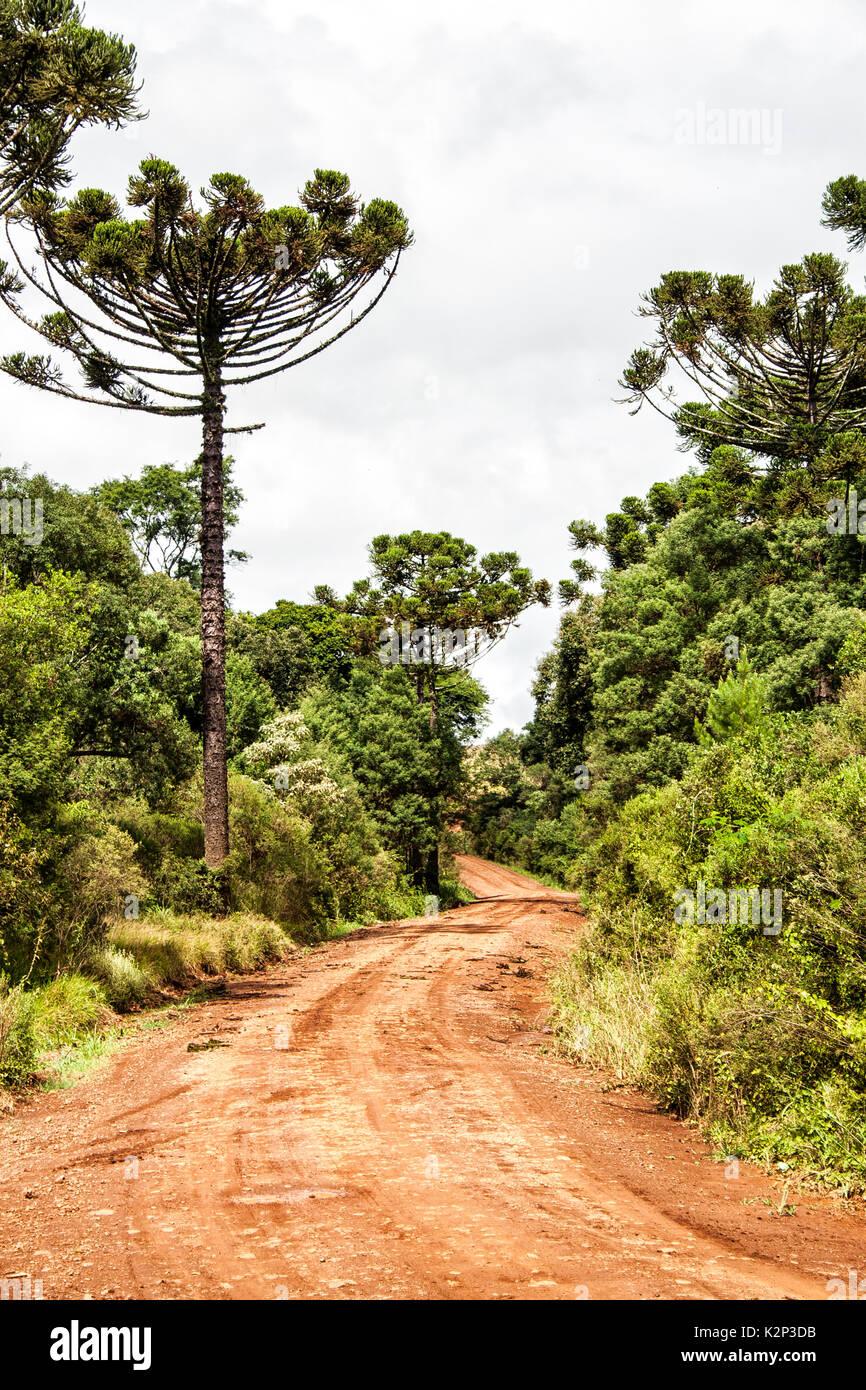 Ouro Verde Santa Catarina fonte: c8.alamy.com