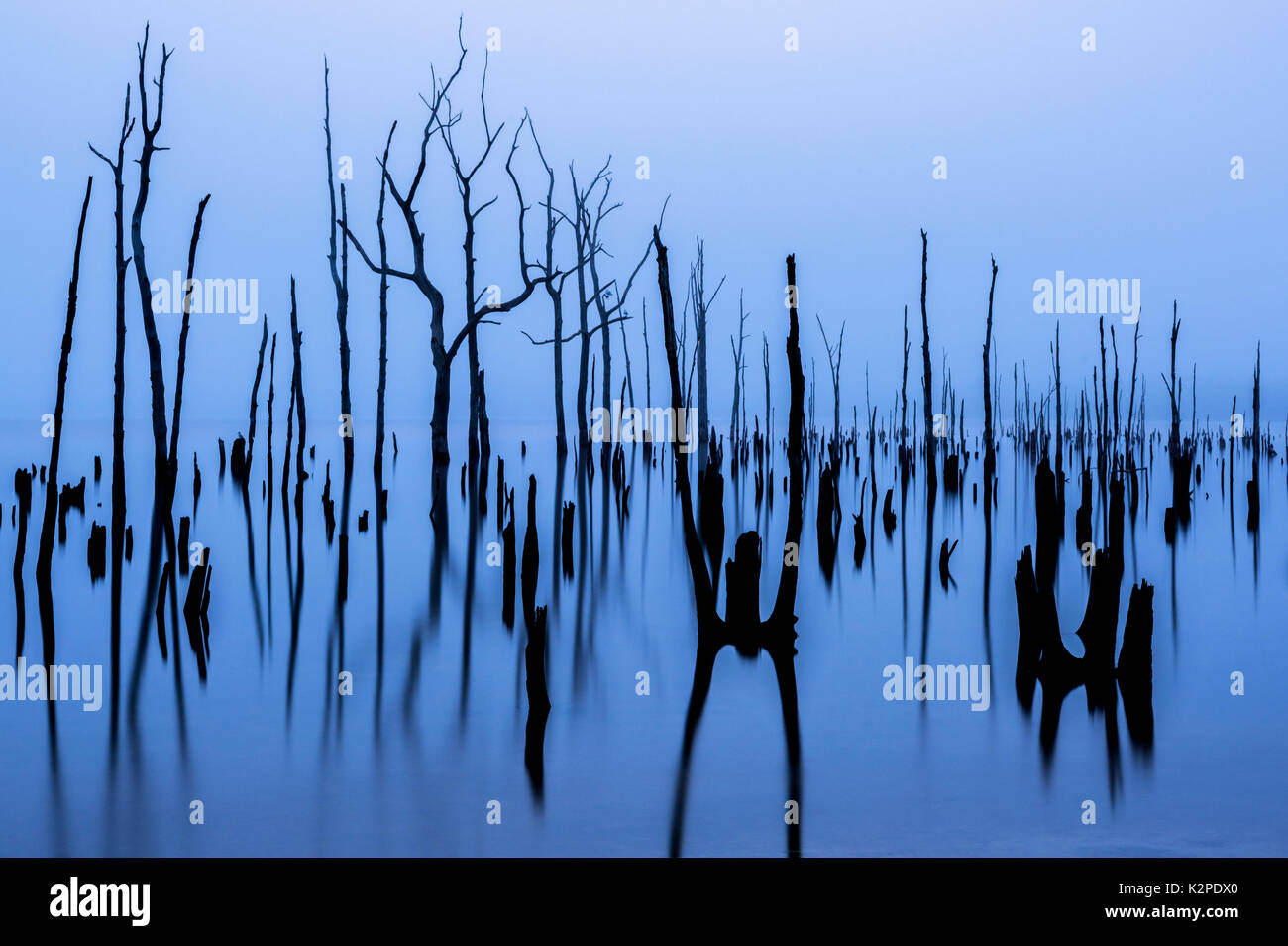 Foggy lake background with a dead trees and their reflections on the foreground. Cool colors and natural mystical scenery - Stock Image