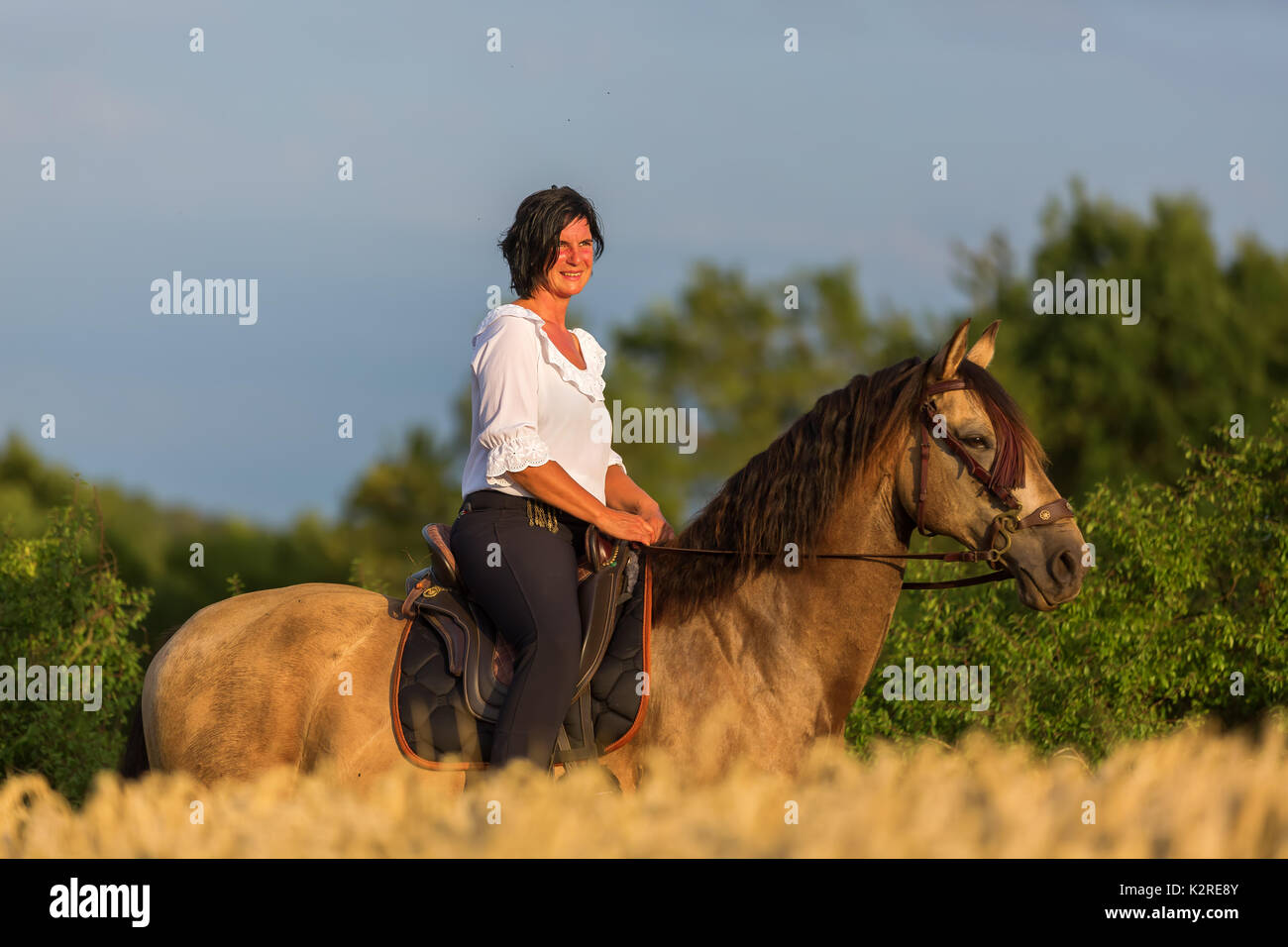 portrait picture of a mature woman on an Andalusian horse - Stock Image