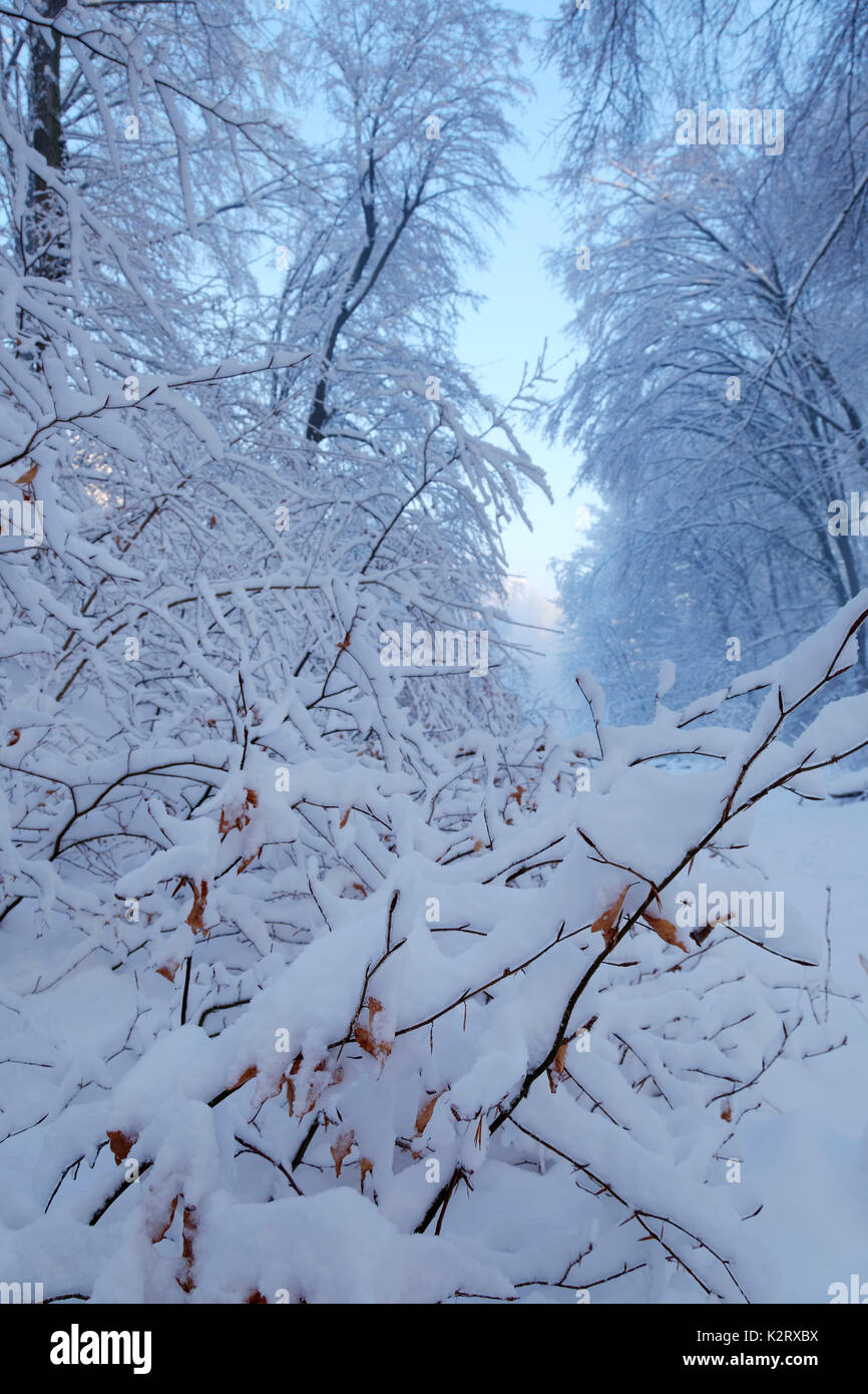 Morning after snowfall - Stock Image