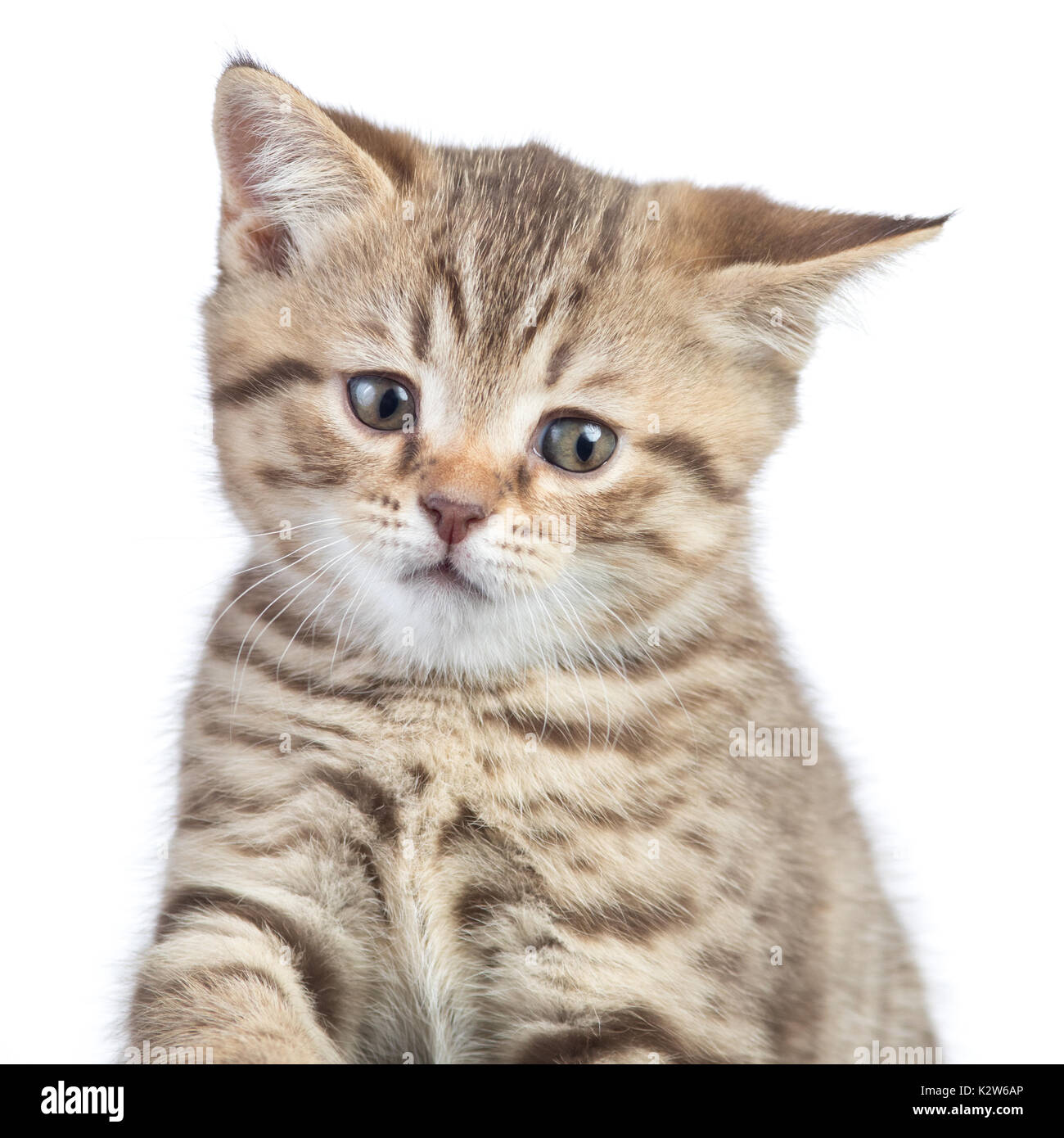 funny confused cat portrait - Stock Image