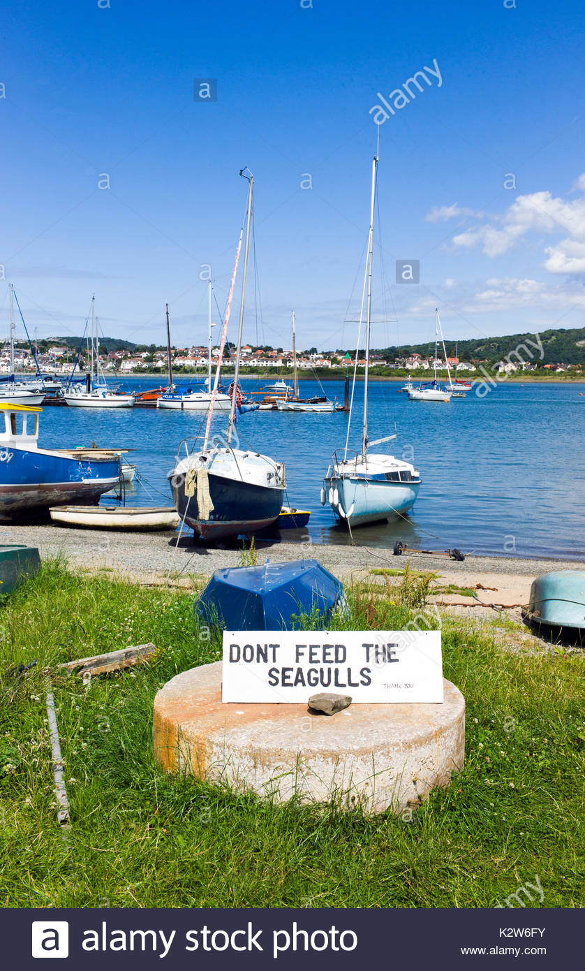 Sign asking the public not to feed the seagulls on Conwy harbour, north wales, UK. Seagulls can be a nuisance to Stock Photo