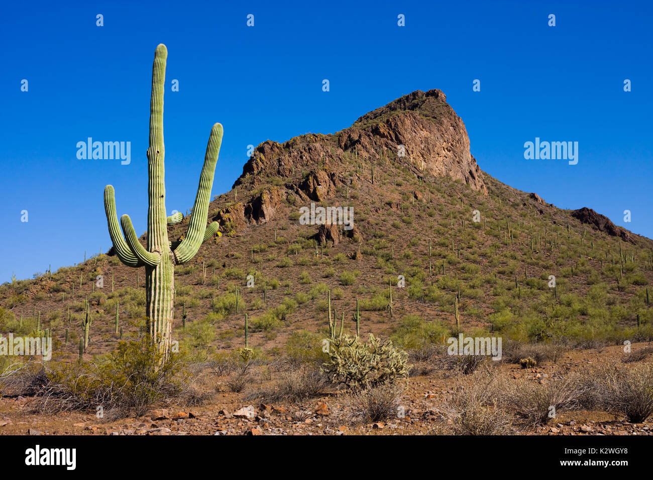 Cactus Jacks Tucson >> Desert Landscaping Stock Photos & Desert Landscaping Stock Images - Alamy