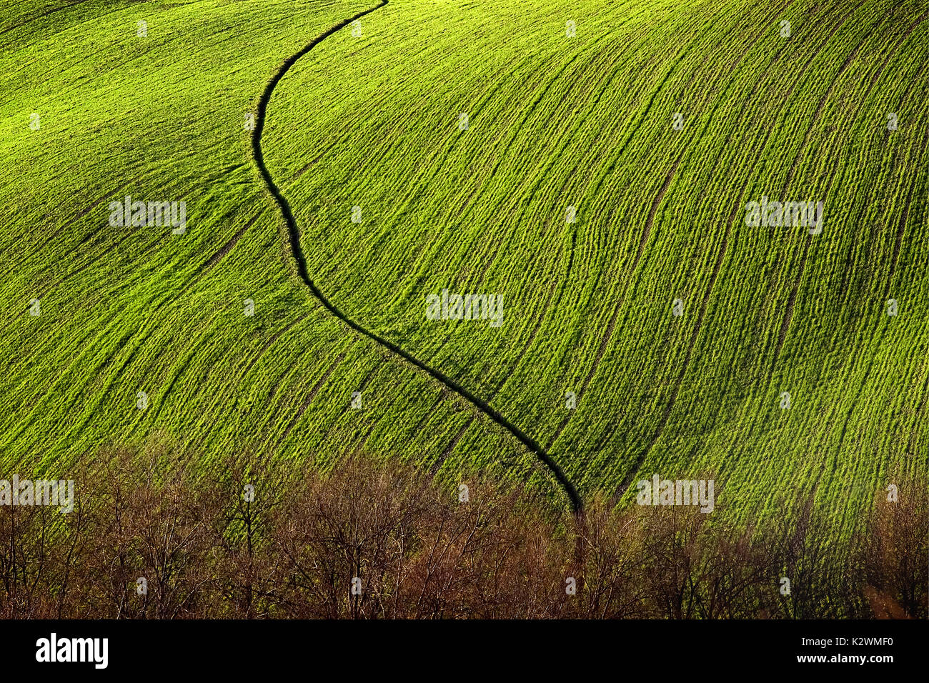 Beautiful Light on Green Tuscan field with Snake-Like drain ditch running through it. The image is abstracted by the light, color, and graphic design - Stock Image