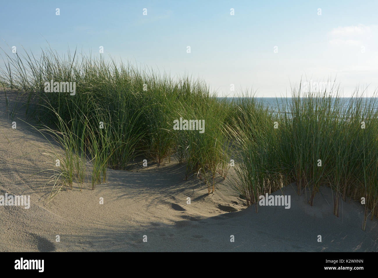 Sand dunes with dunes grass on the North Sea - Stock Image