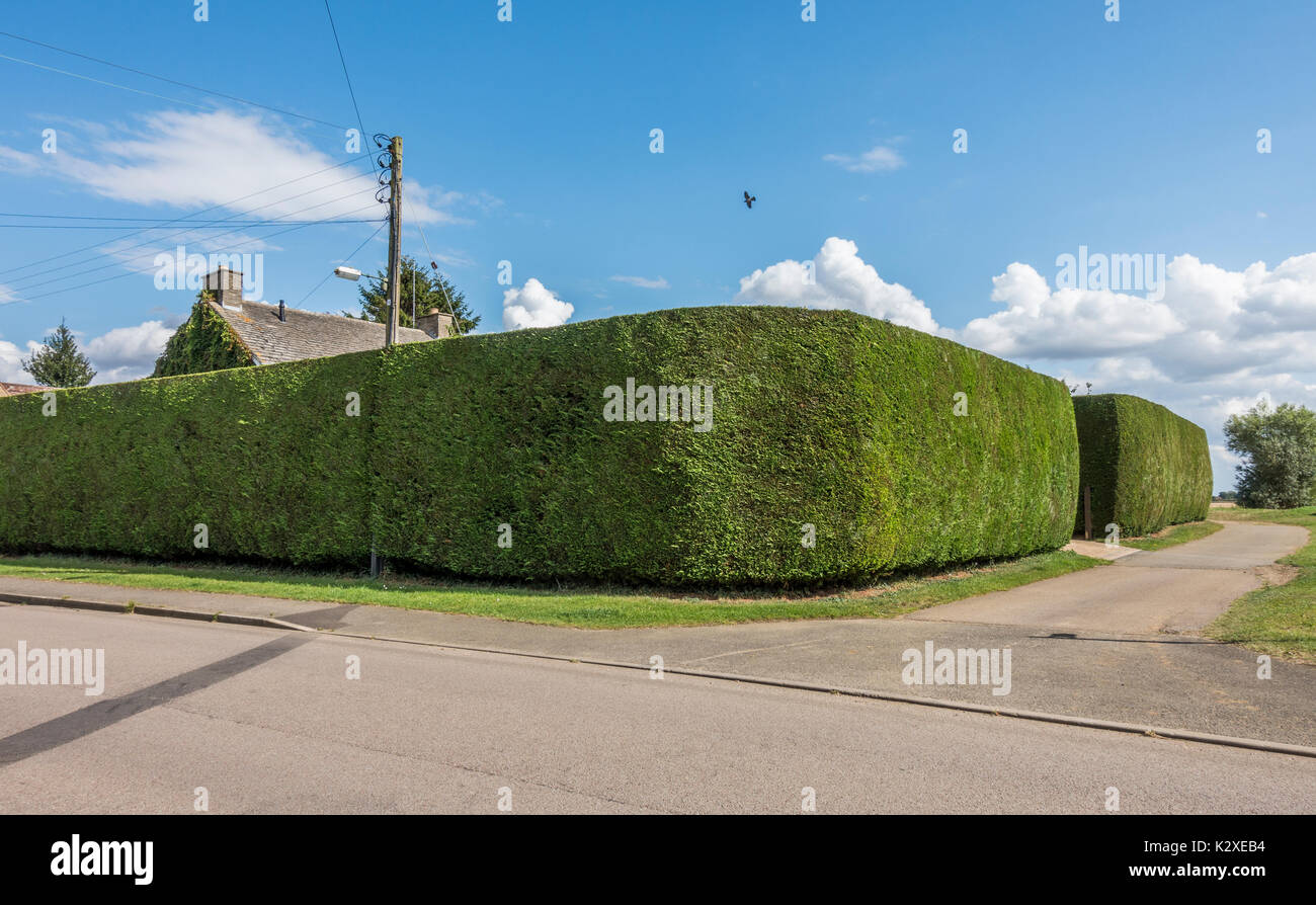 A well kept recently trimmed very tall garden hedge surrounding a property, giving the occupants maximum privacy. Langtoft, Lincolnshire, England, UK. - Stock Image