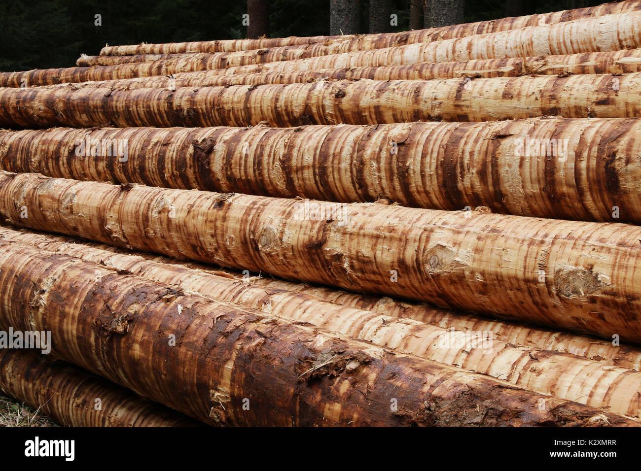 Wald, Forst, Holz, Natur, Baeume, Staemme, entrindet, Rohstoff, nachwachsend Stock Photo