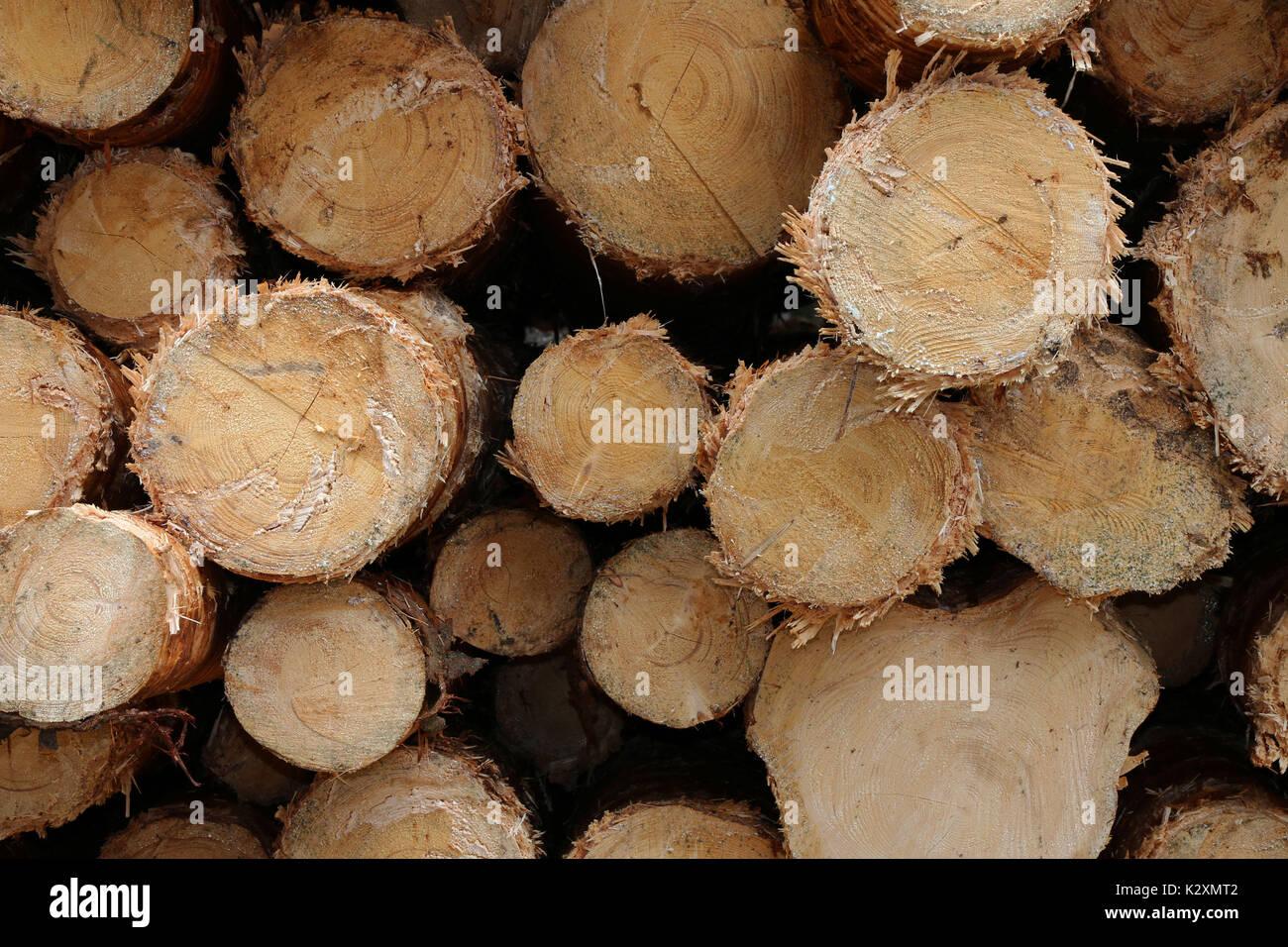 Wald, Forst, Holz, Natur, Baeume, Staemme, entrindet, Rohstoff, nachwachsend - Stock Image