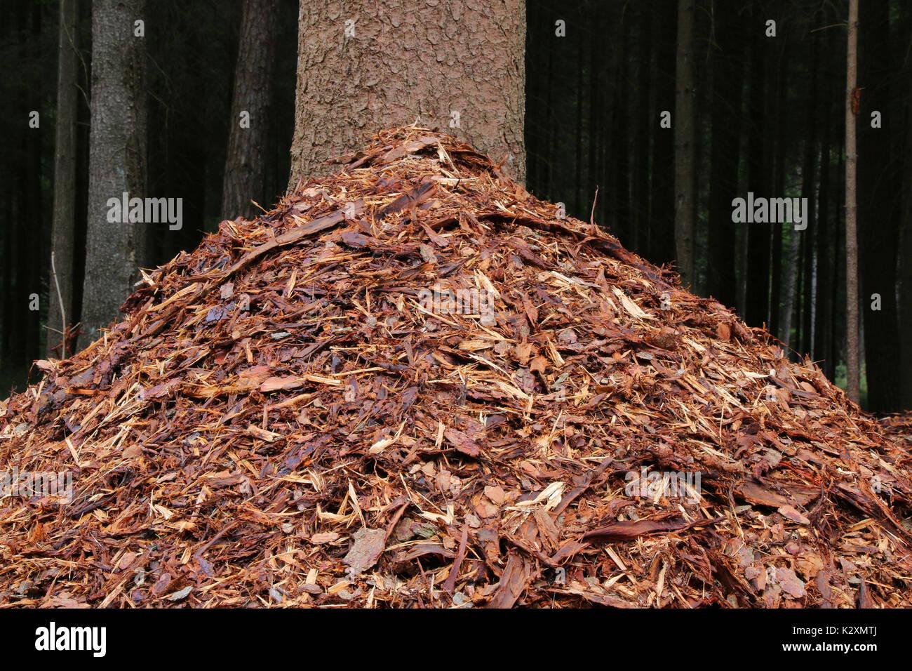 Baumrinde, Rinde, Baeume, Mulch, Wald, Forst, Holz, Natur, Baeume - Stock Image