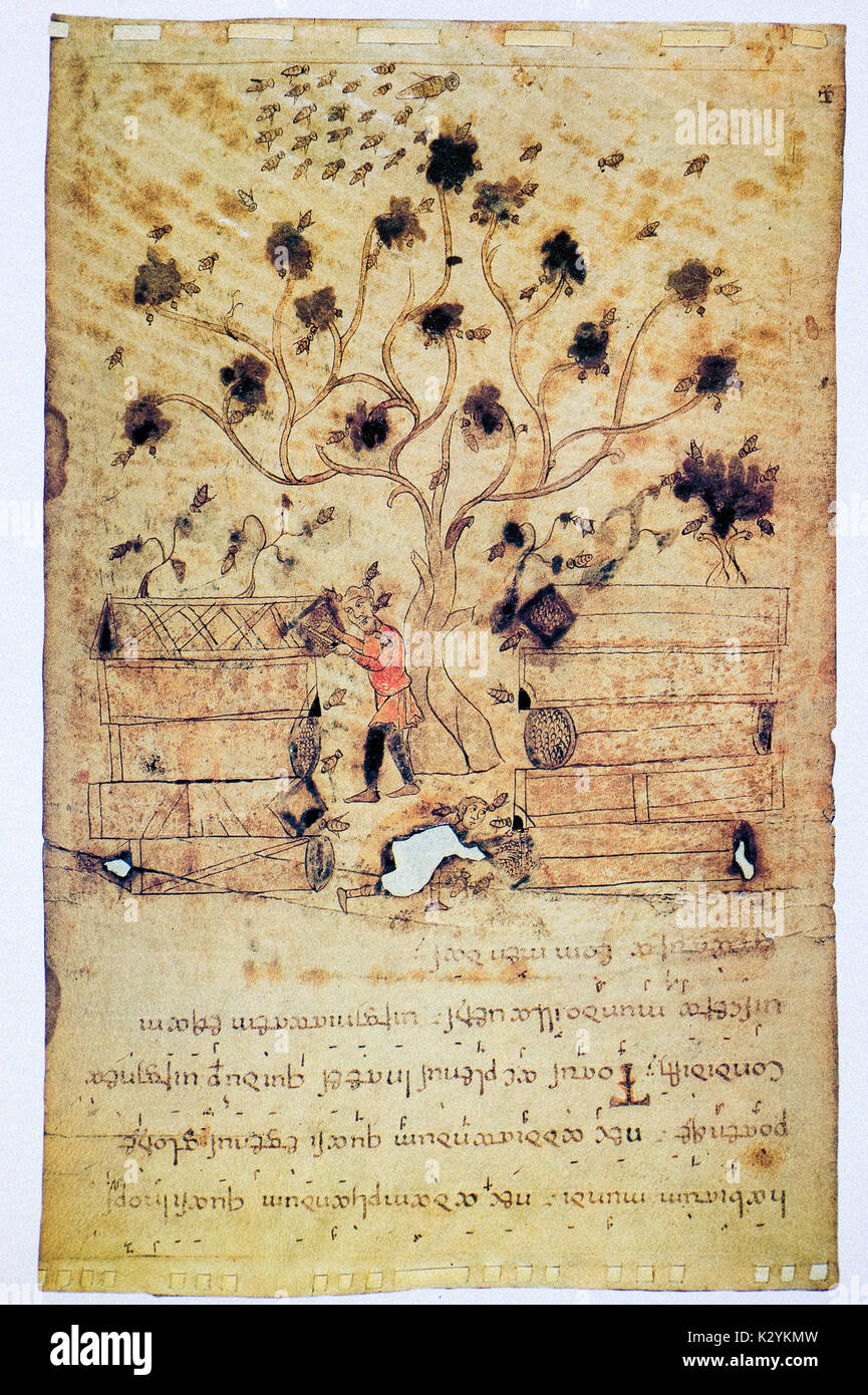 Exulet - XI - XIII century - Bee scene symbolizing the virginity of Mary in the background a tree. A swarm of bees and two peasants that bleed - Stock Image