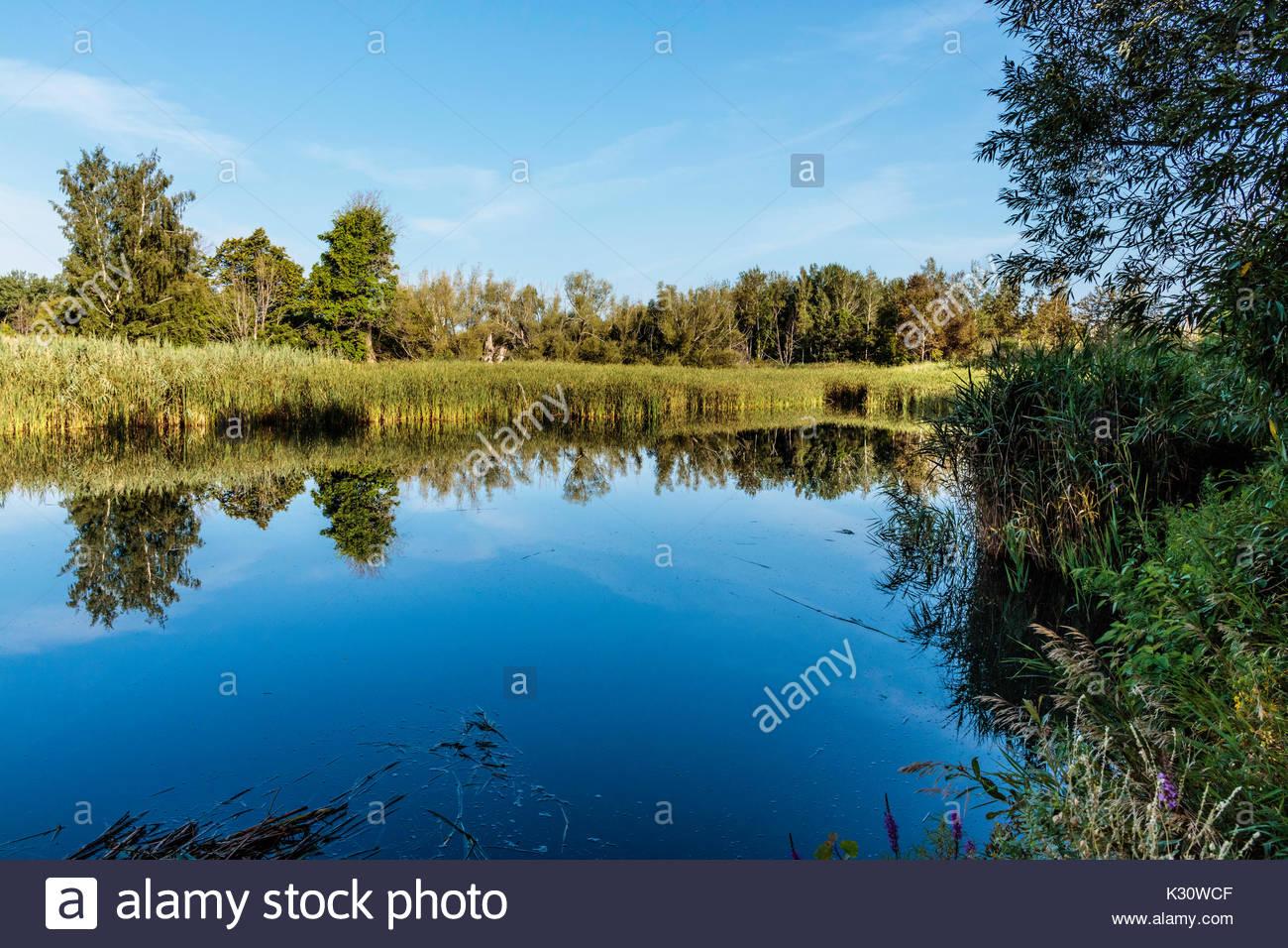 reflections in stormwater retention pond sedimentation pond environment marsh Eastpoint Park Toronto Ontario Canada - Stock Image