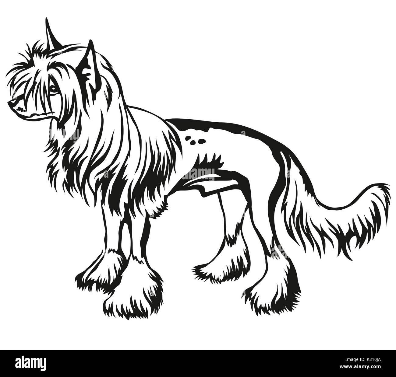 Decorative portrait of standing in profile Chinese Crested Dog, vector isolated illustration in black color on white background - Stock Vector