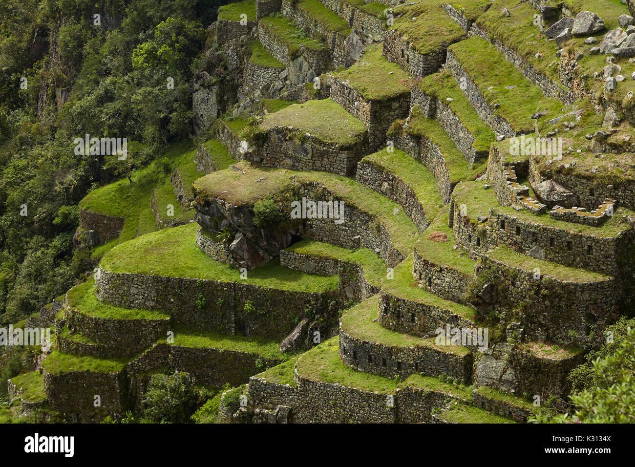 Cultivation Terraces Machu Picchu World Heritage Site