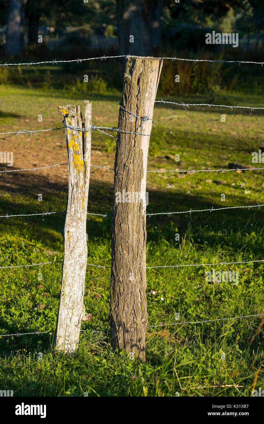 Wire fence on grassy rural. Las Merindades County Burgos, Castile and Leon, Spain, Europe Stock Photo