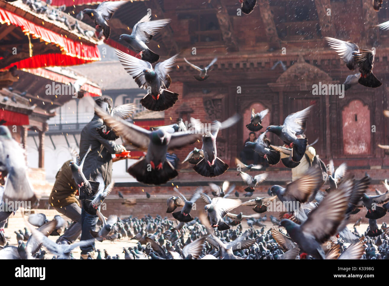 Pigeons covering Kathmandu's Durbar square's temples and pagodas - Stock Image