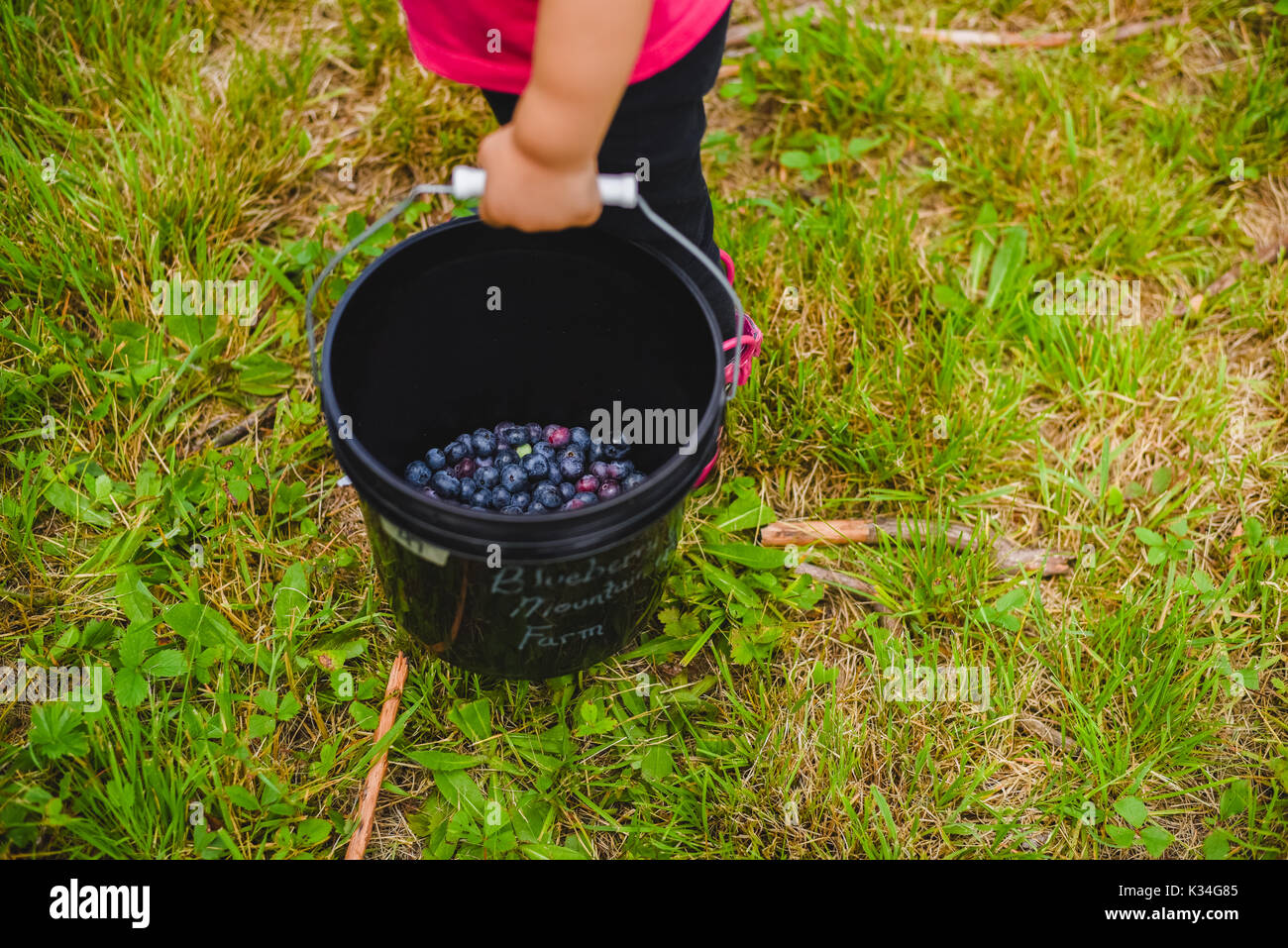 A small child holding a bucket full of blueberries - Stock Image