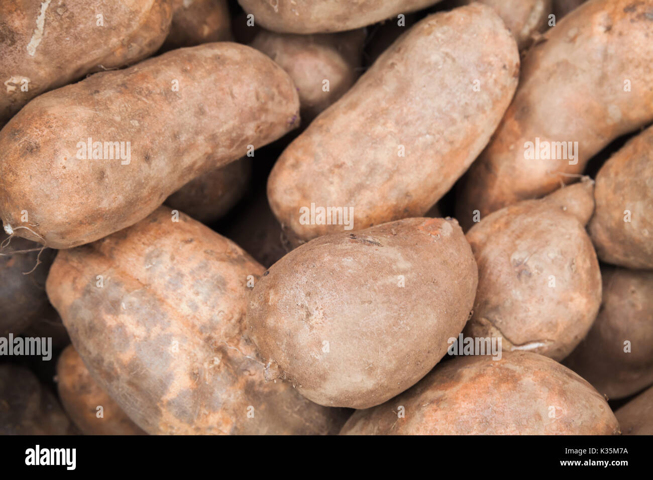 Sweet potato roots lay on the counter of street food market on Madeira island, Portugal. Close-up photo with selective focus - Stock Image