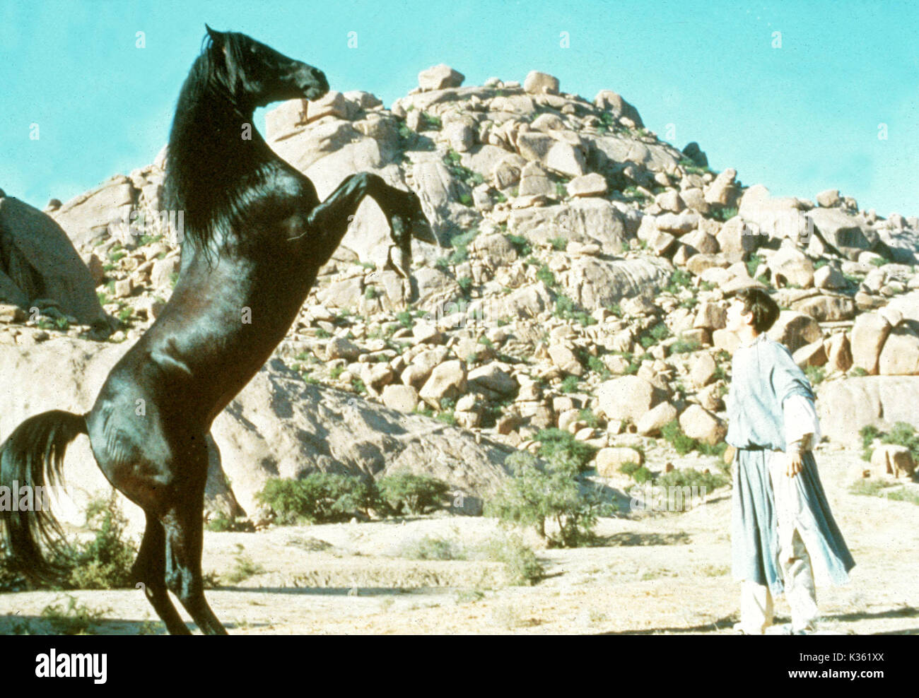 THE BLACK STALLION RETURNS Picture from the Ronald Grant Archive THE BLACK STALLION RETURNS      Date: 1983 - Stock Image