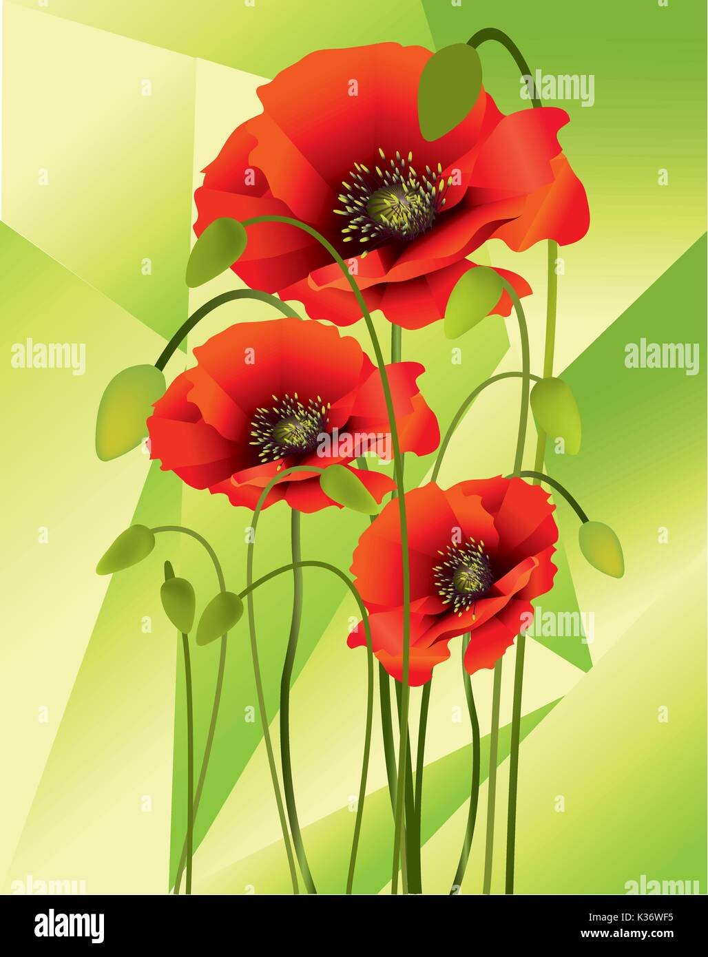 Beautiful bright colors poppies with buds and seed pods Stock Vector ...